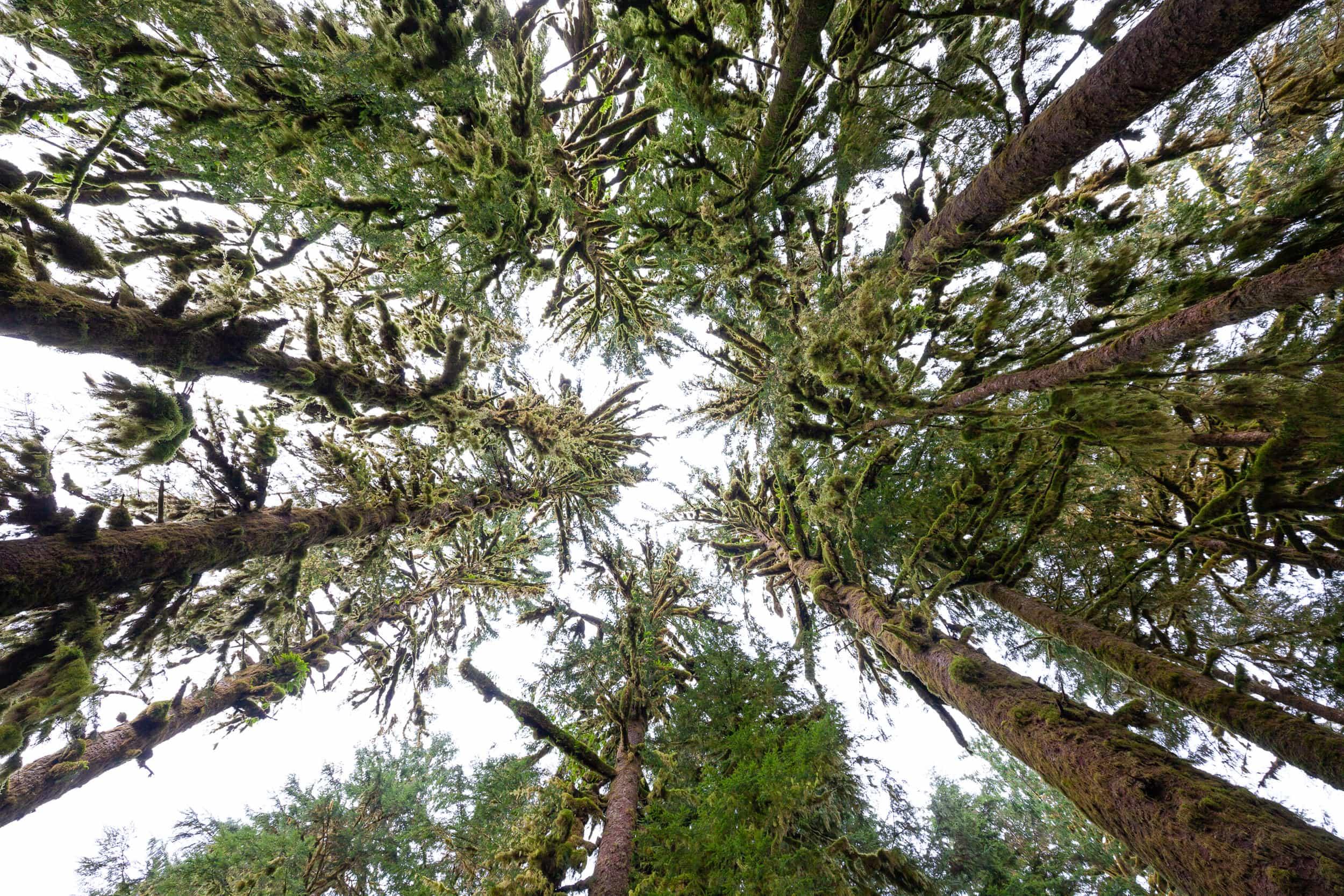 Great-Bear-Rainforest-TJ-Watt-7