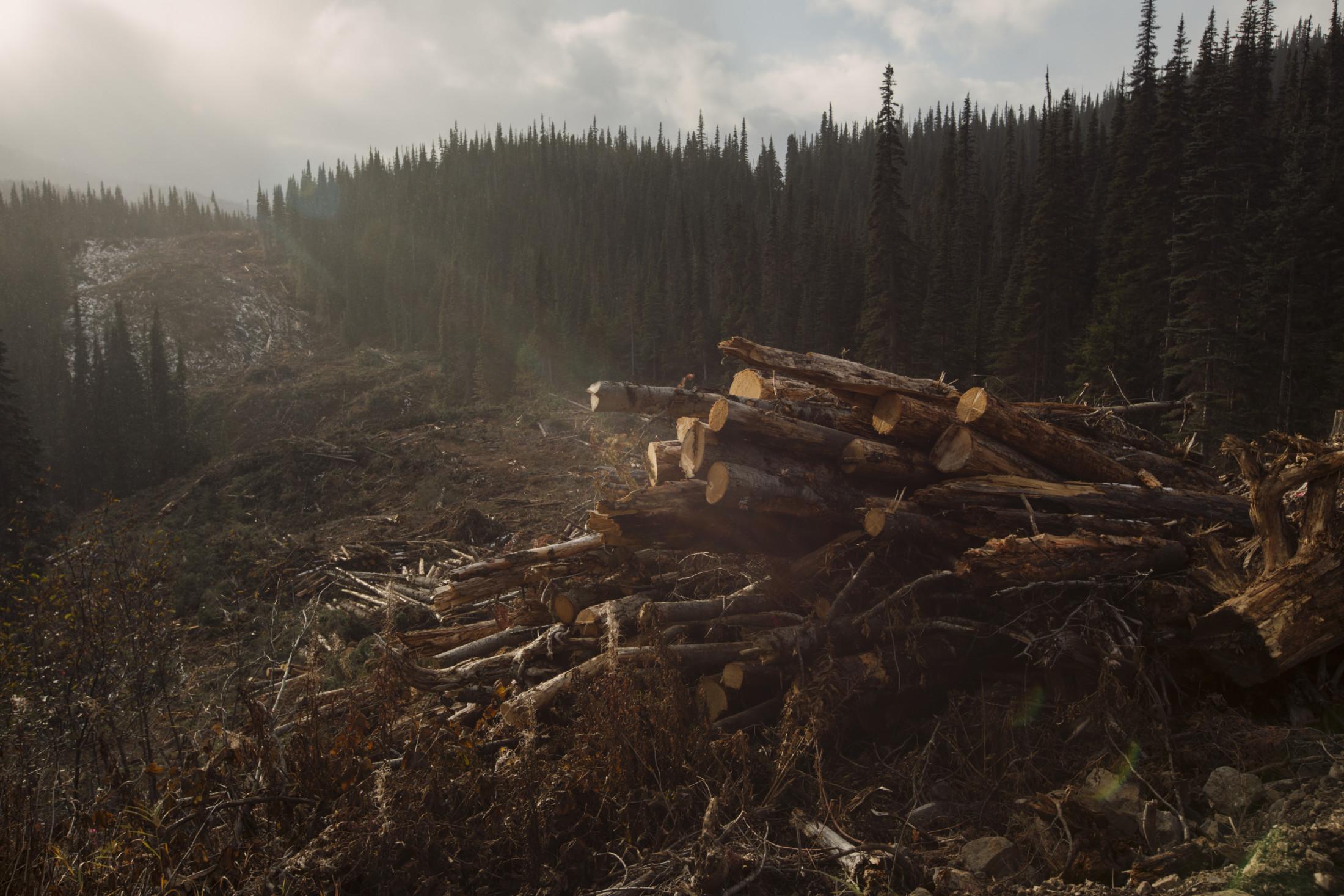 Logging for the Coastal GasLink pipeline