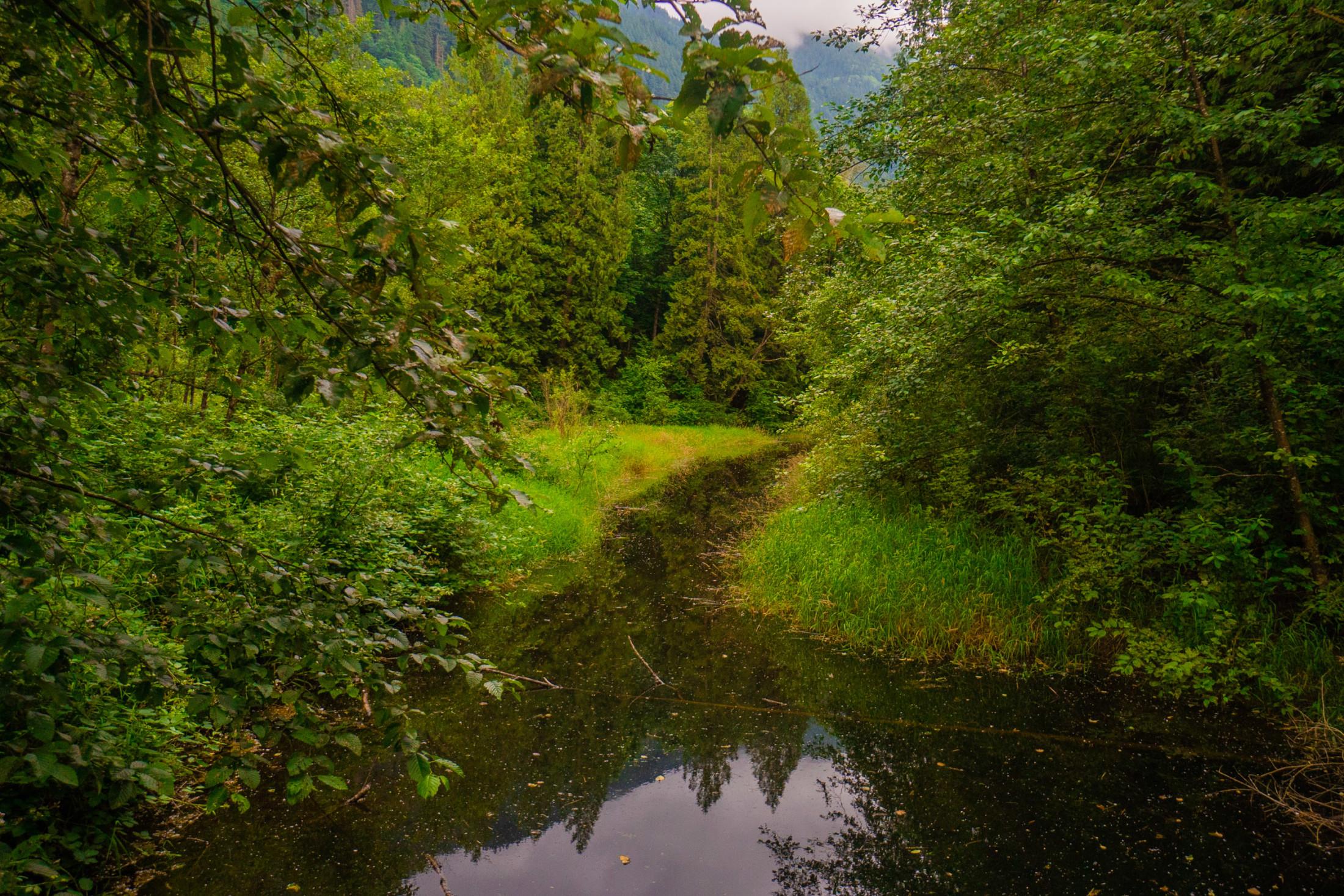 Fraser River side channel