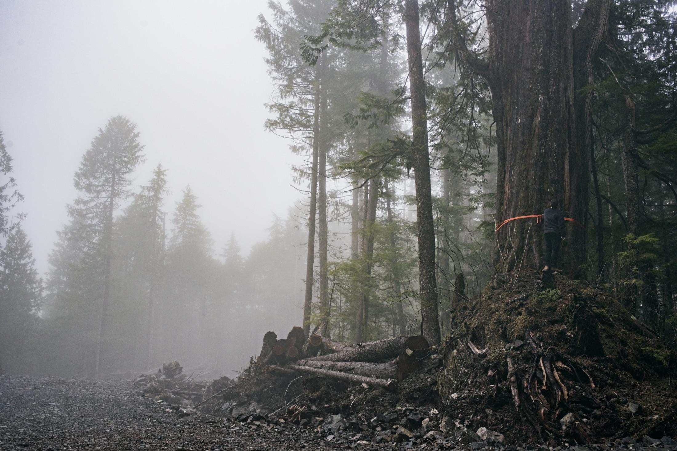 Logging Tahsis Troy Moth