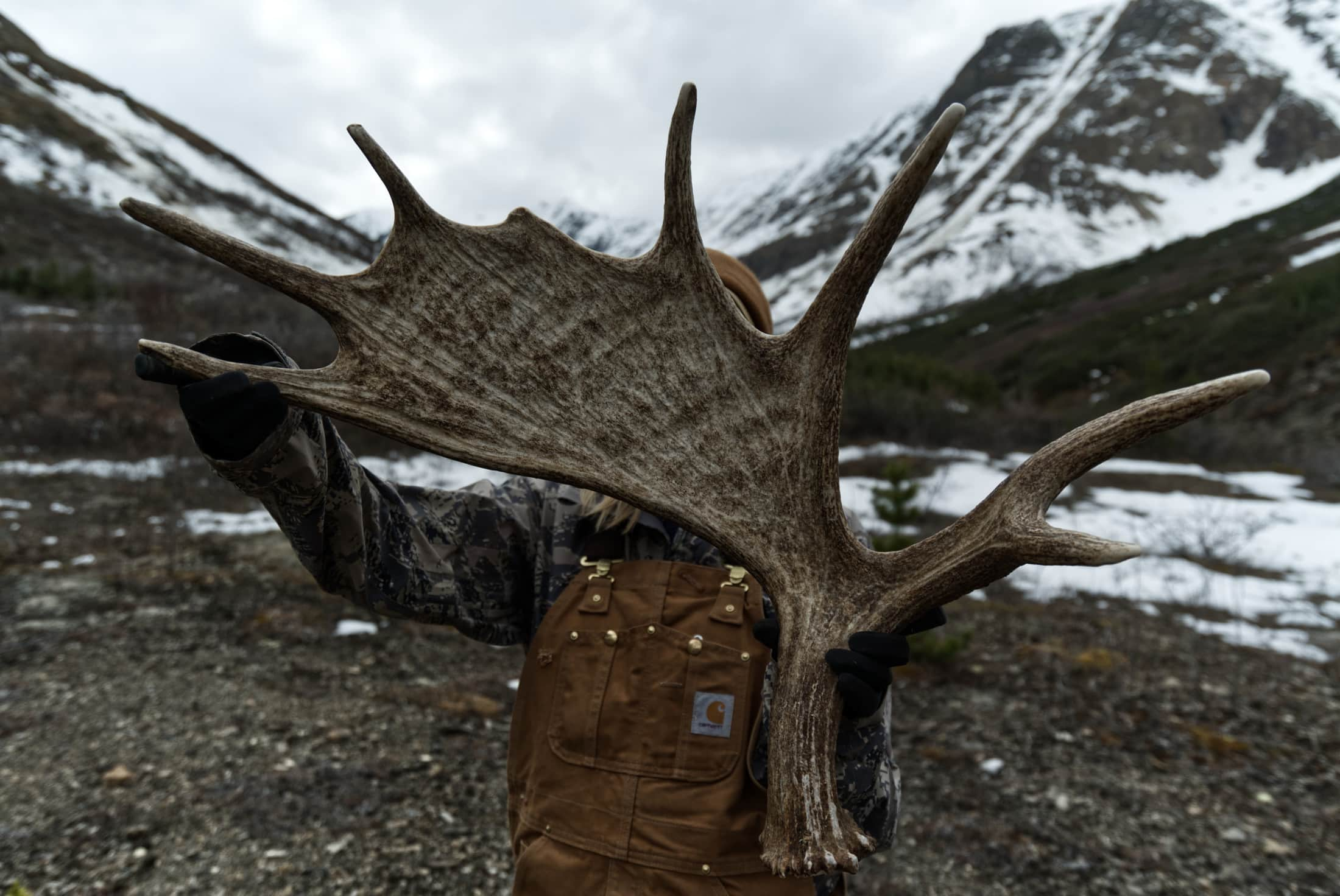 Muskwa-Kechika moose antlers