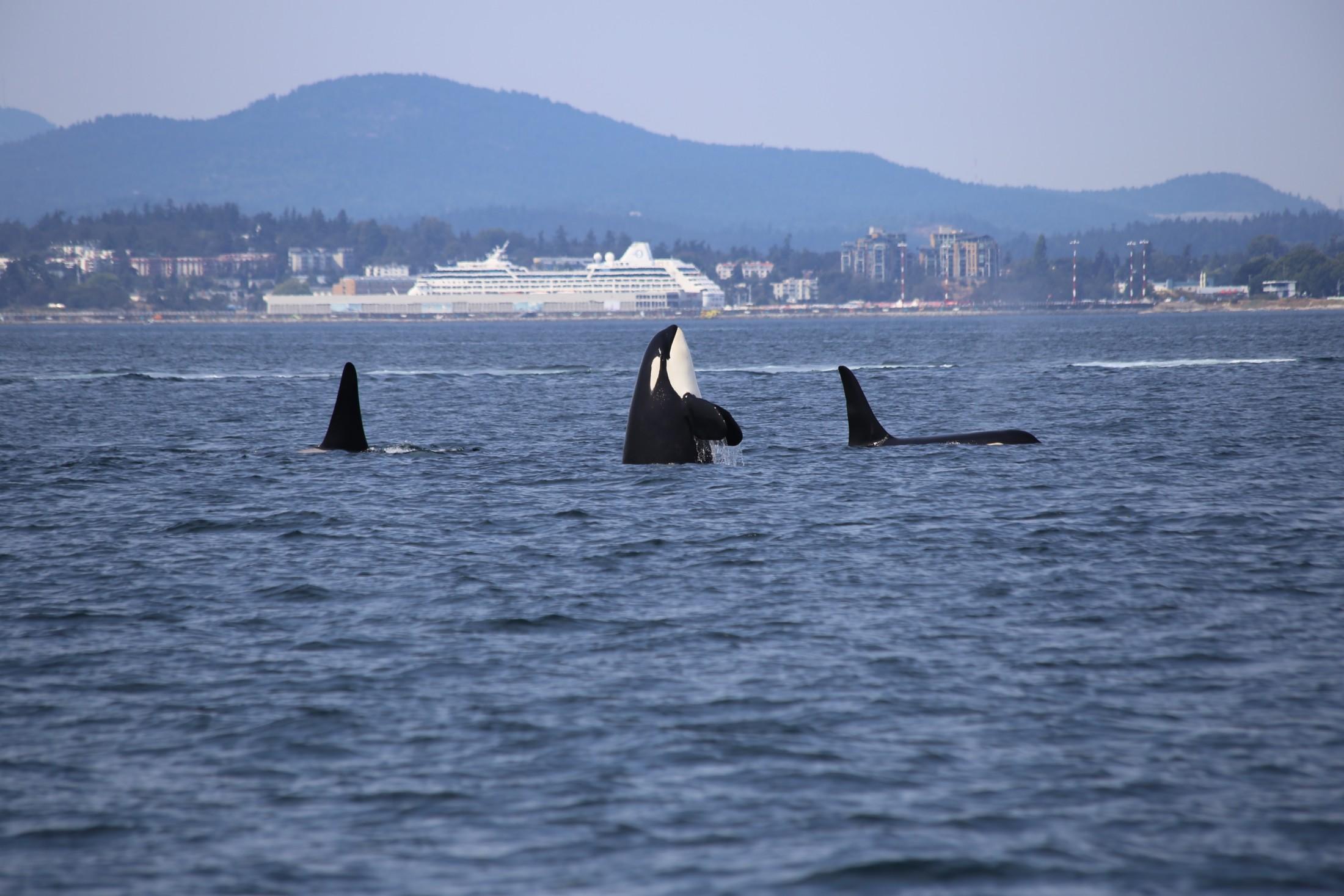 dick-martin-orca victoria bc
