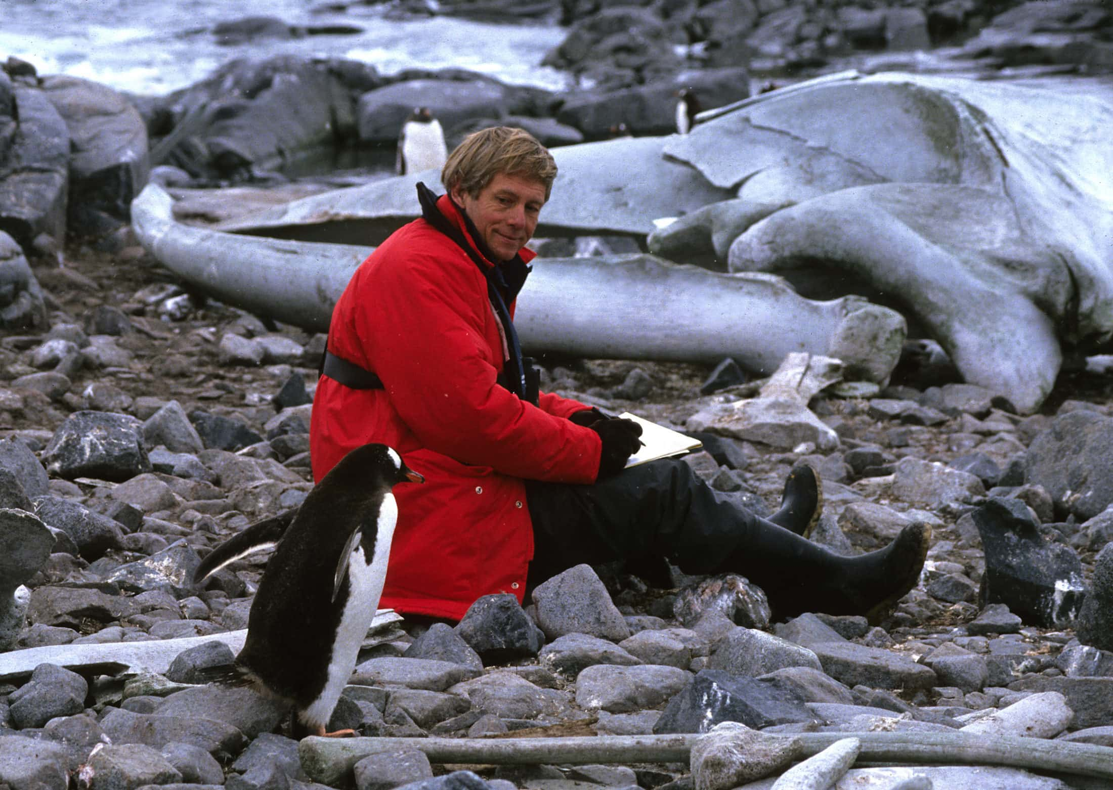 Robert Bateman and penguins, Antarctica