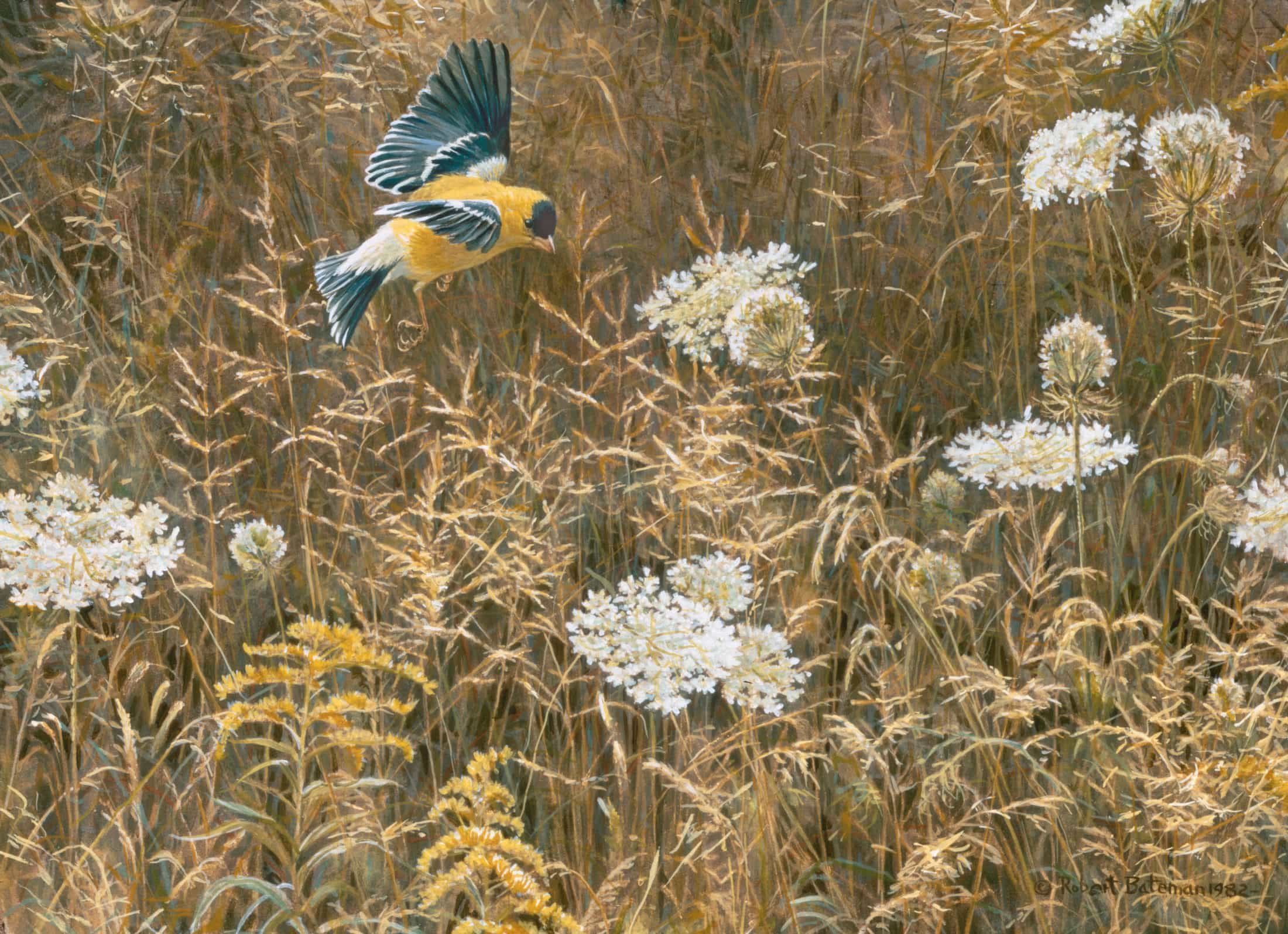 Robert Bateman, Queen Anne's Lace & American Goldfinch