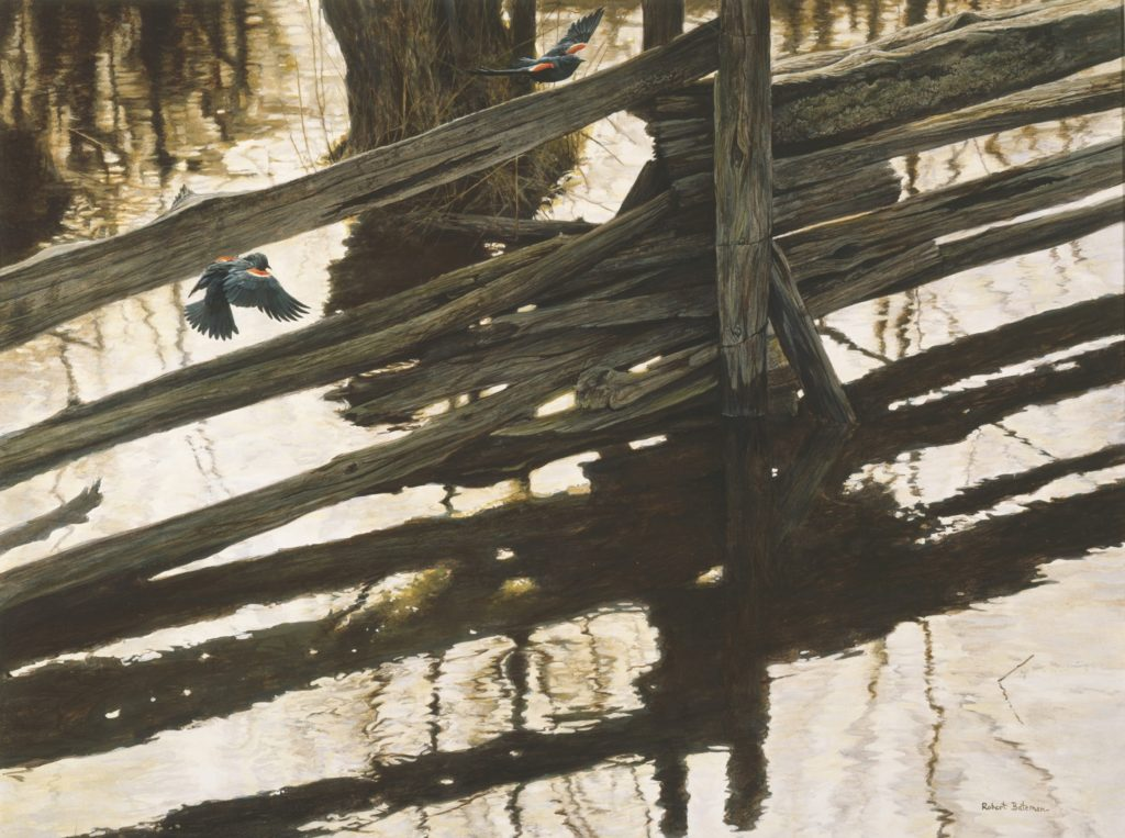 Robert Bateman, Red-winged Blackbirds & Rail Fence