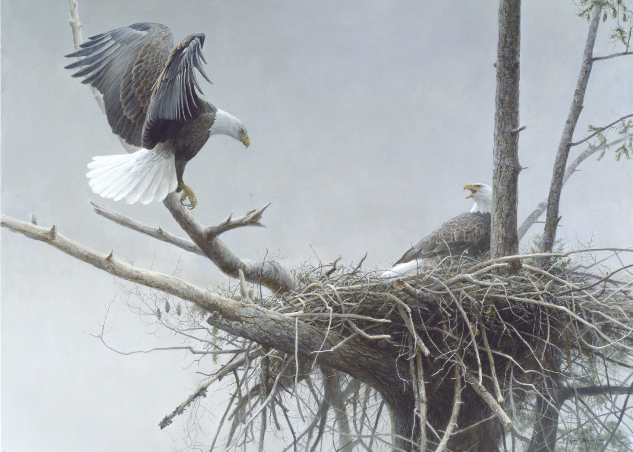 Robert Bateman, The Return – Bald Eagle, Pair