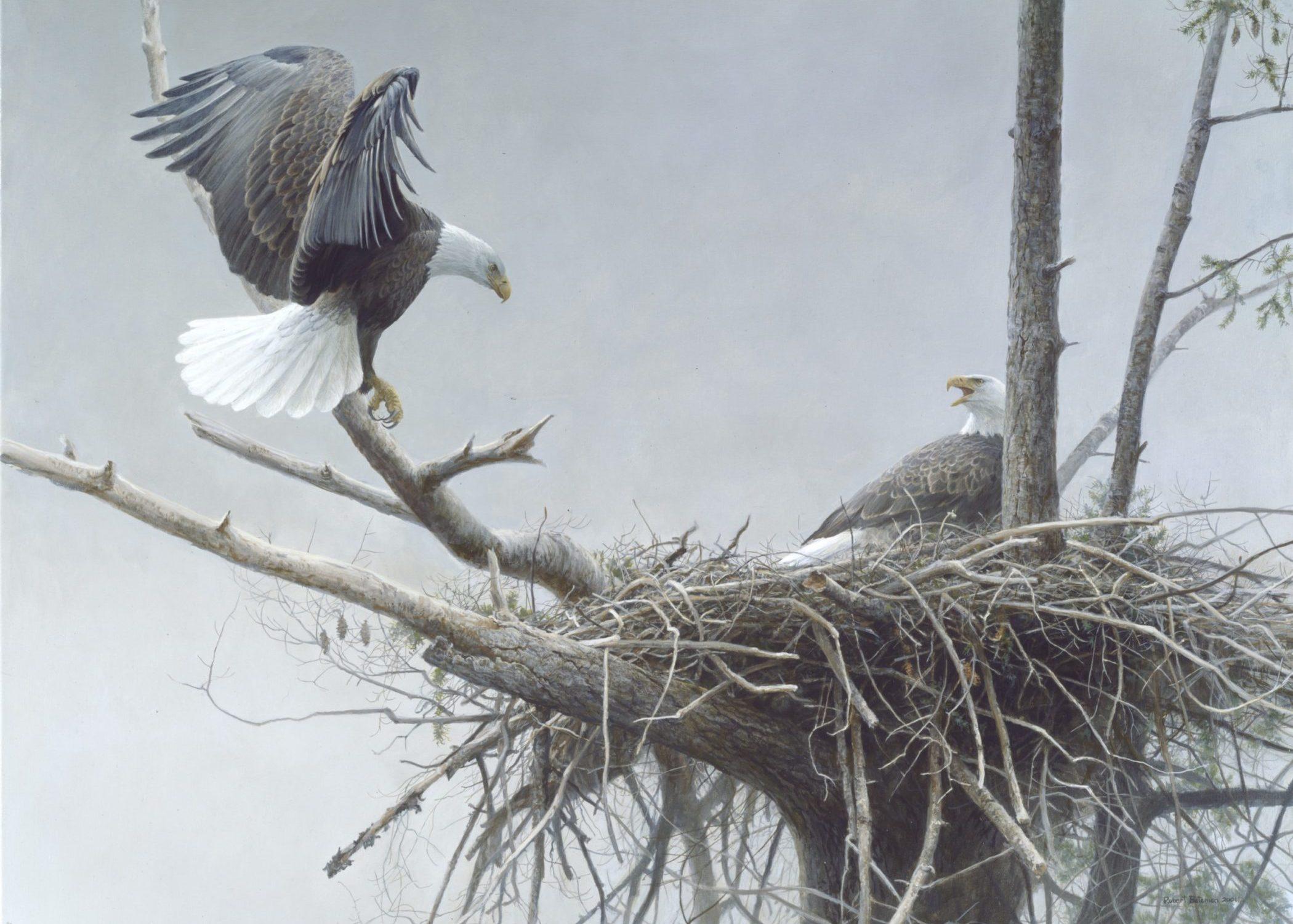 Robert Bateman, The Return – Bald Eagle, Pair