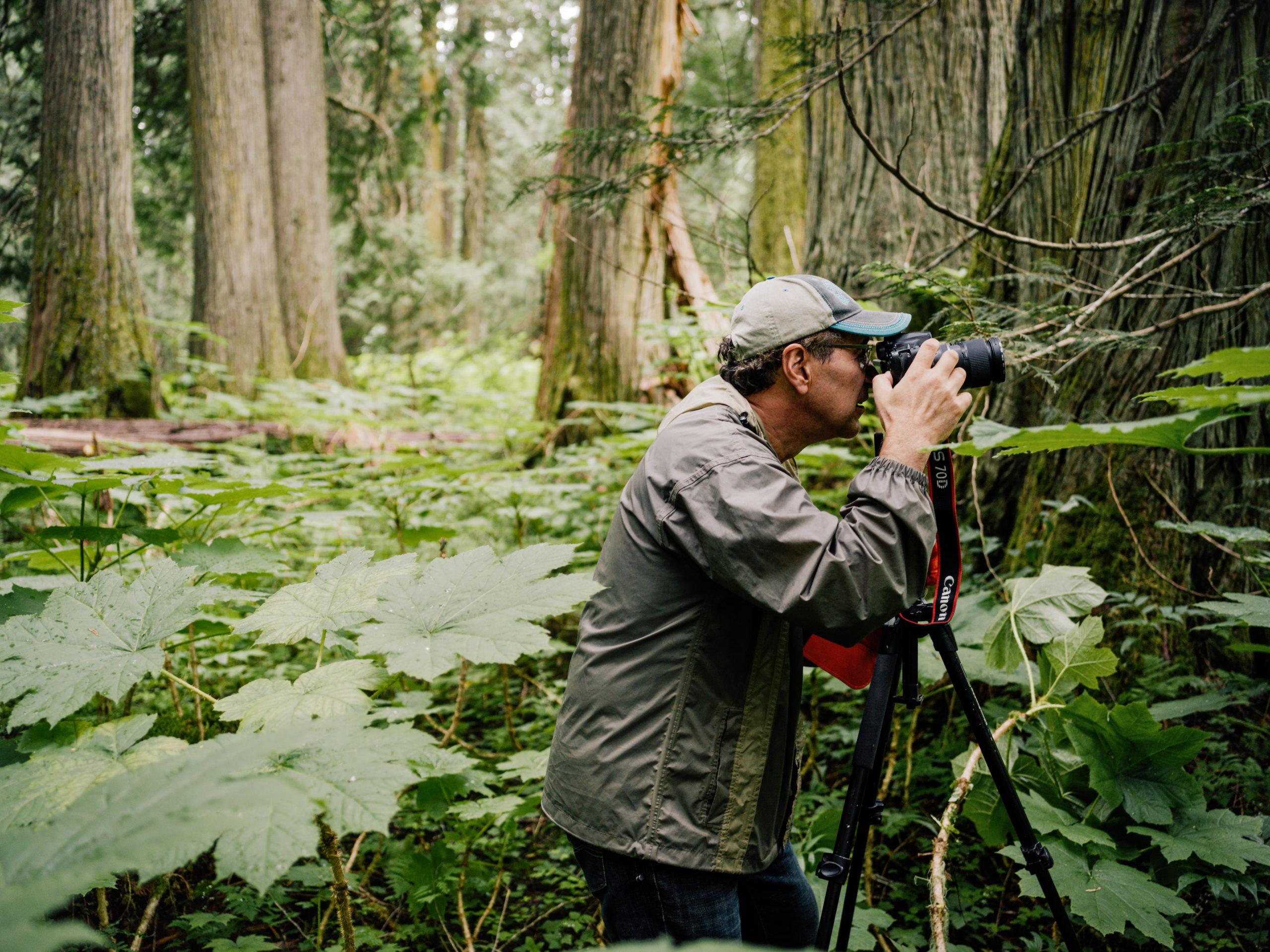 Dominick DellaSala The Narwhal Canada's Forgotten Rainforest Taylor Roades