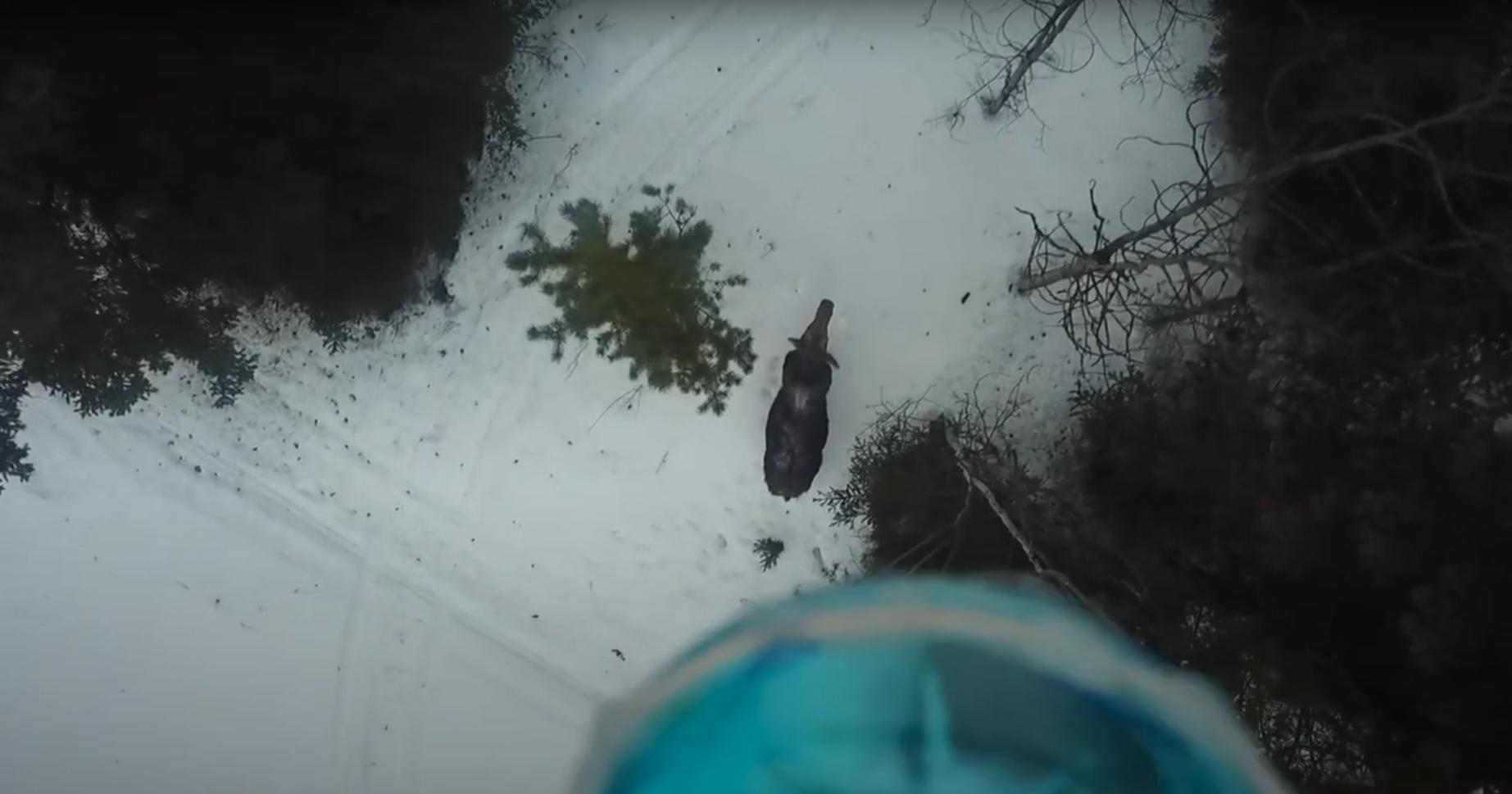 Ghost Moose Drone Eric Becker Winter Tick