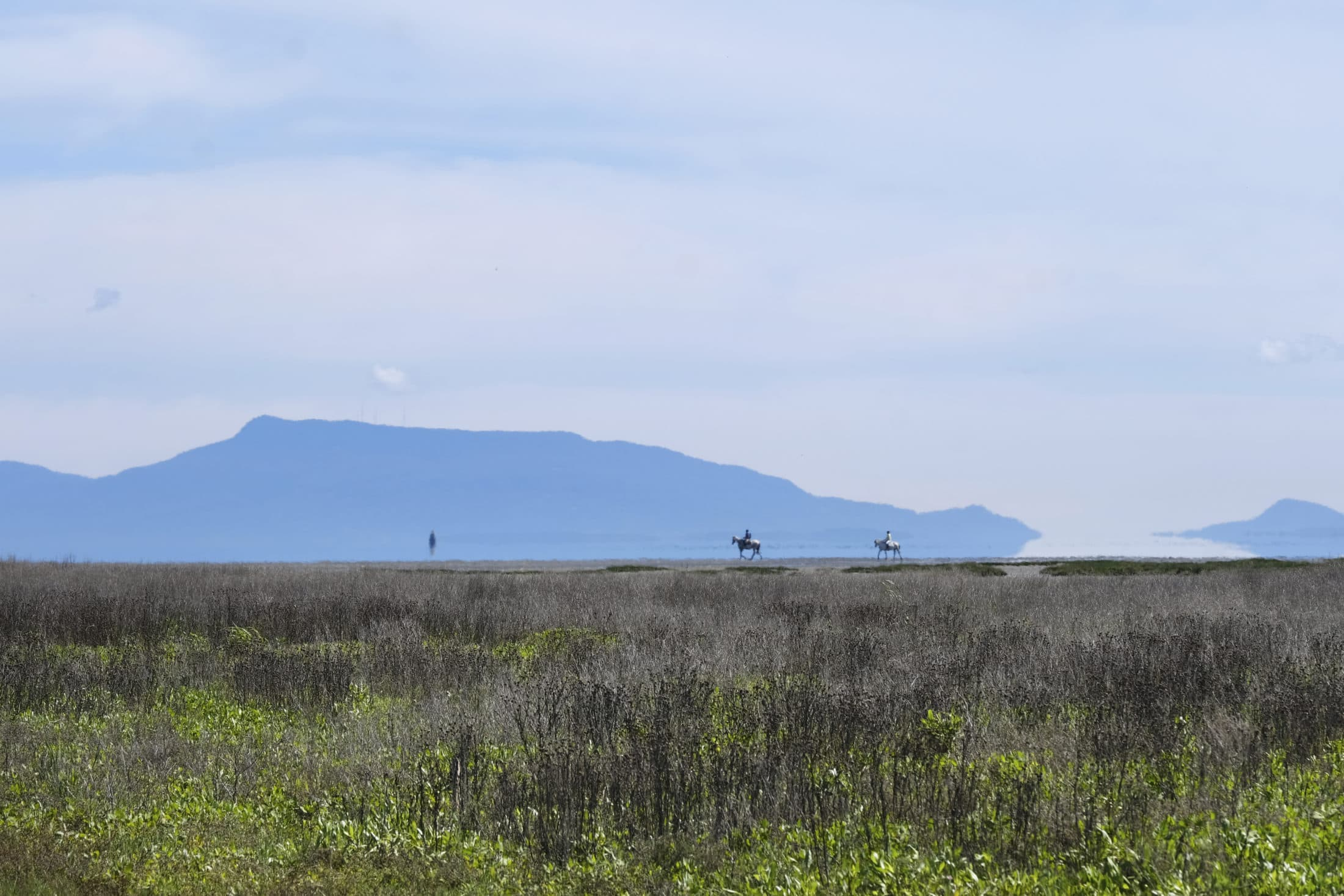 Boundary Bay horse ride