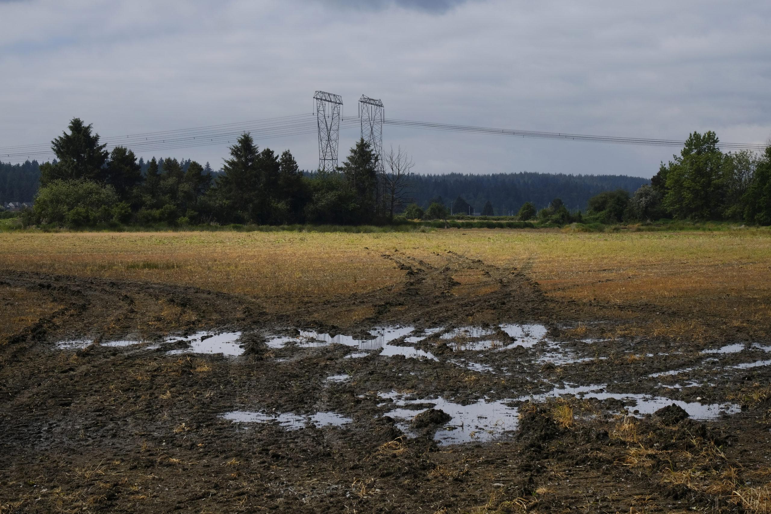 Boundary Bay wetland