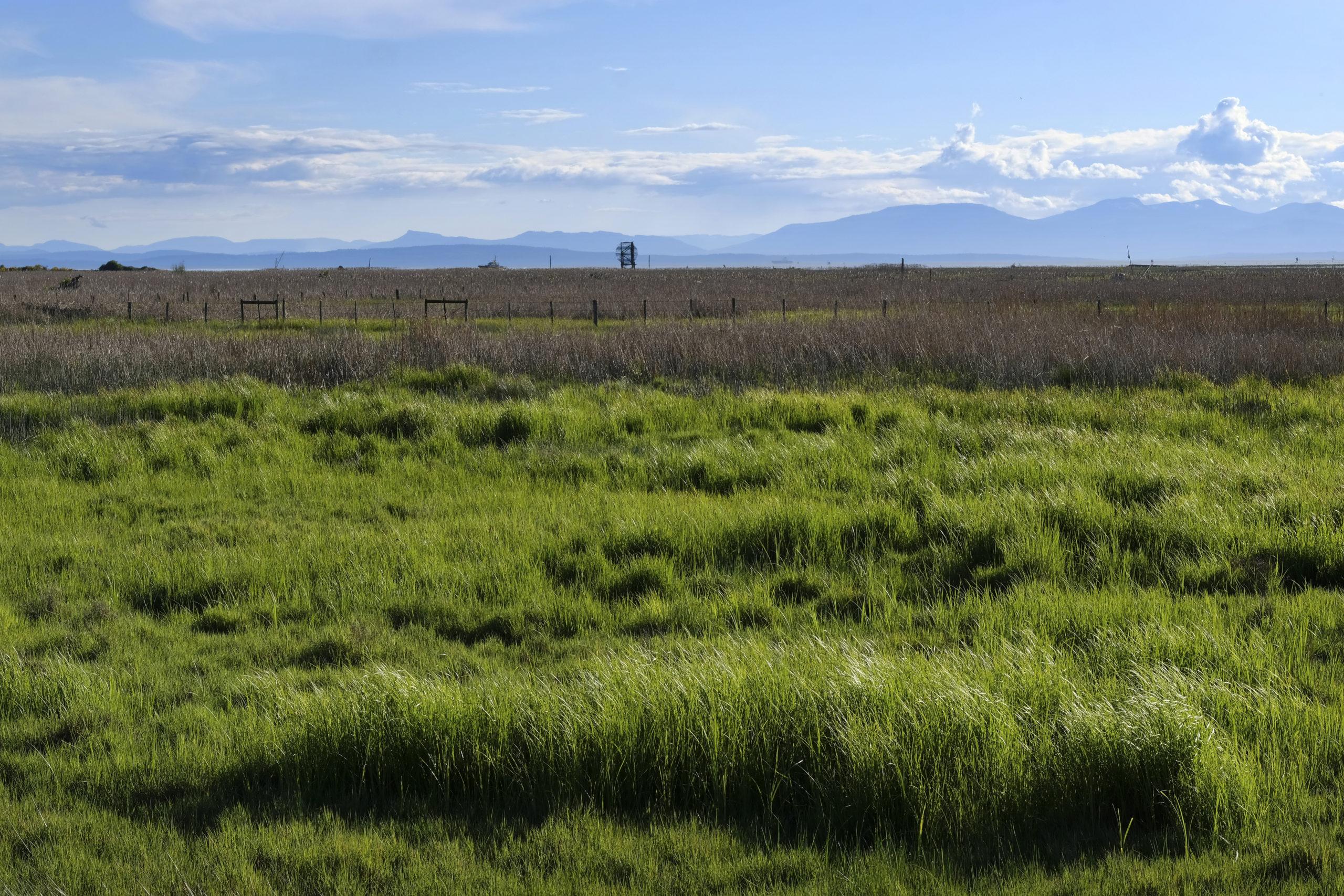 Boundary bay grassland