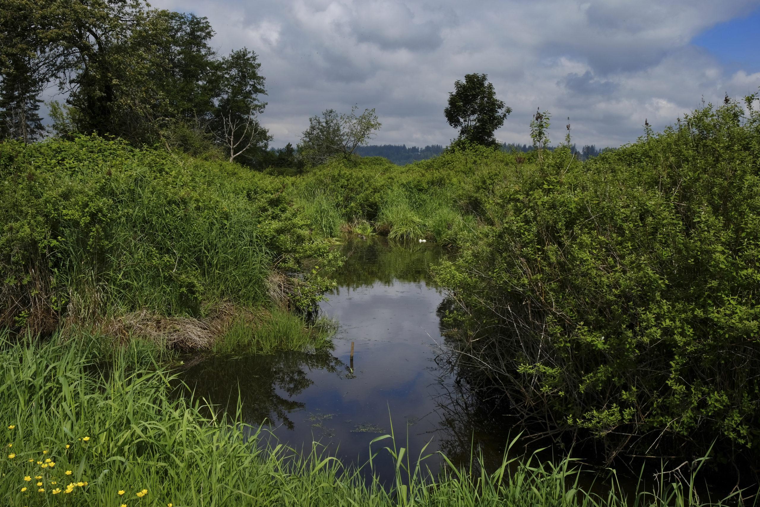 Boundary bay marshland