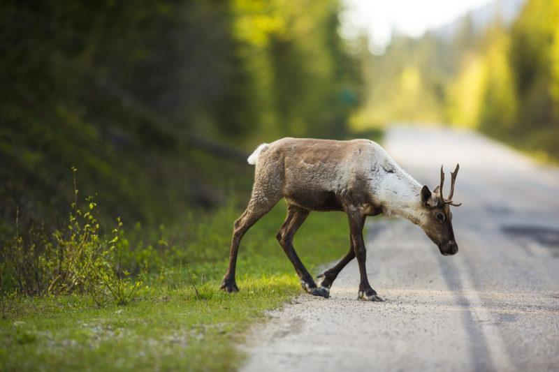 Caribou B.C. environmental assessments