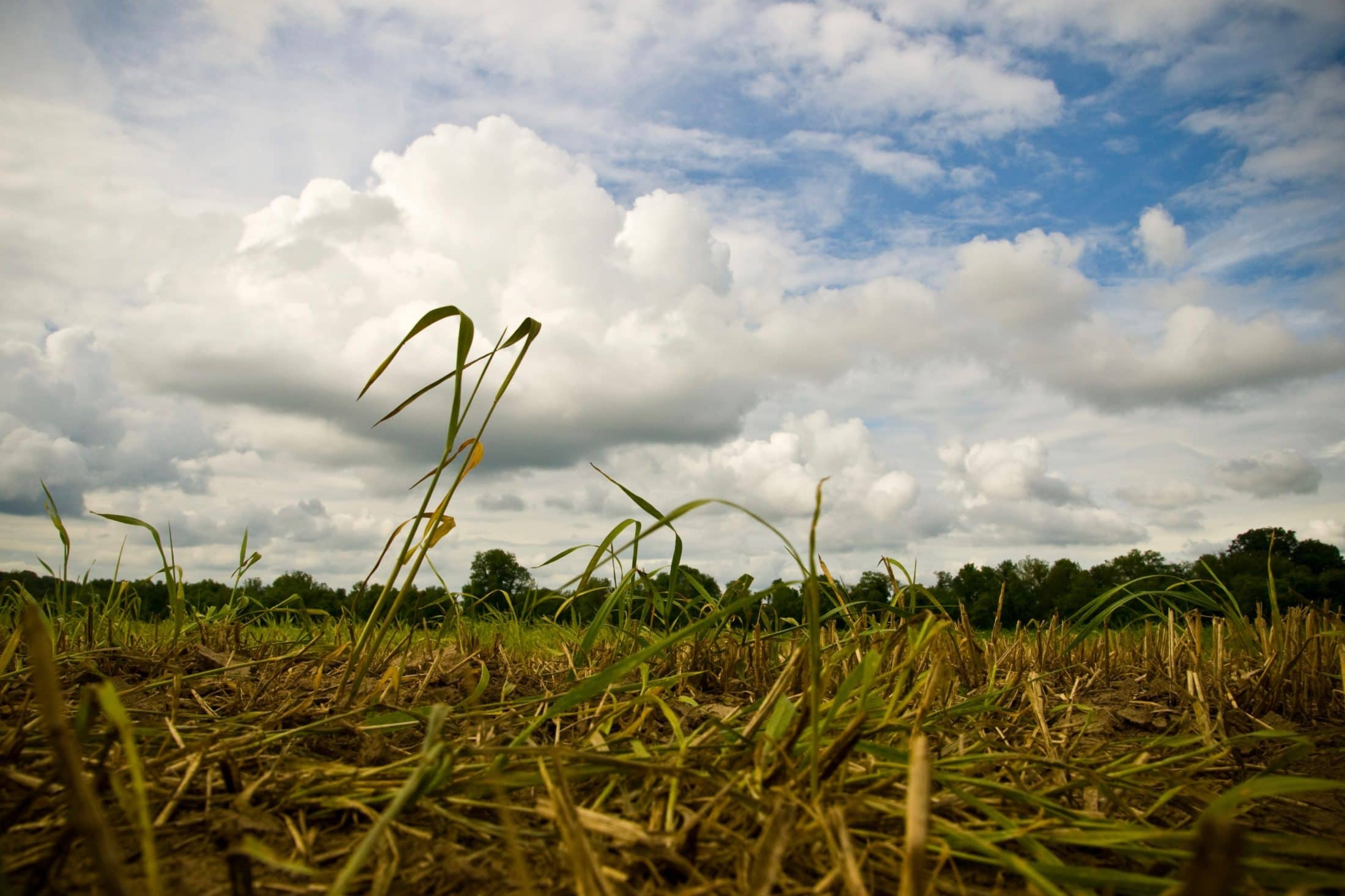 Alberta drought agricultural industry