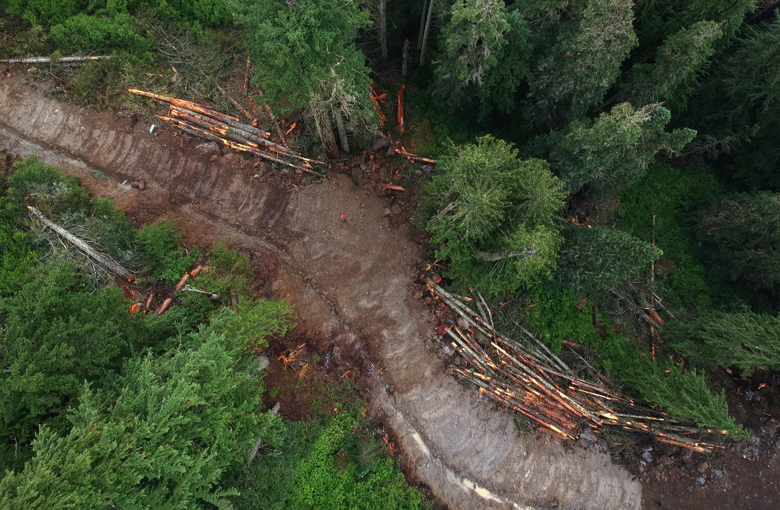 Logging B.C. spotted owl habitat