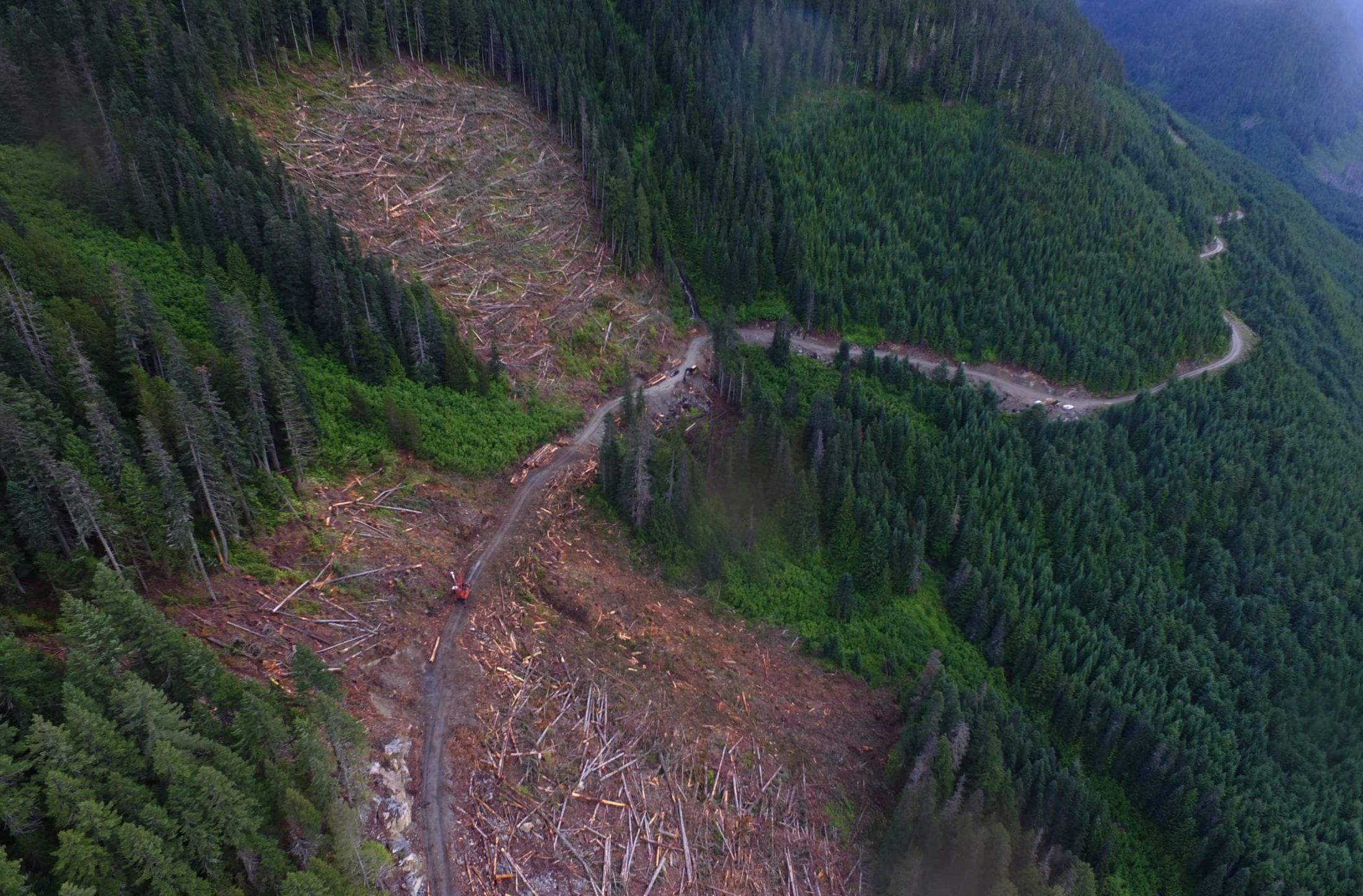 B.C. approves 312 new logging clearcuts in habitat of endangered spotted owls