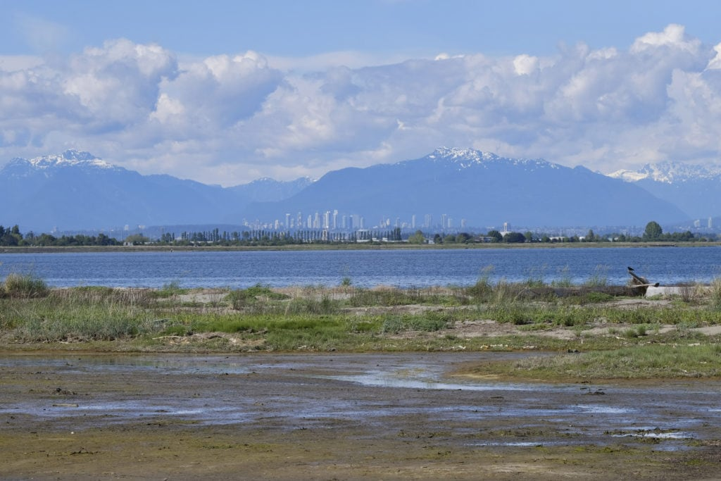 Boundary Bay salt marsh
