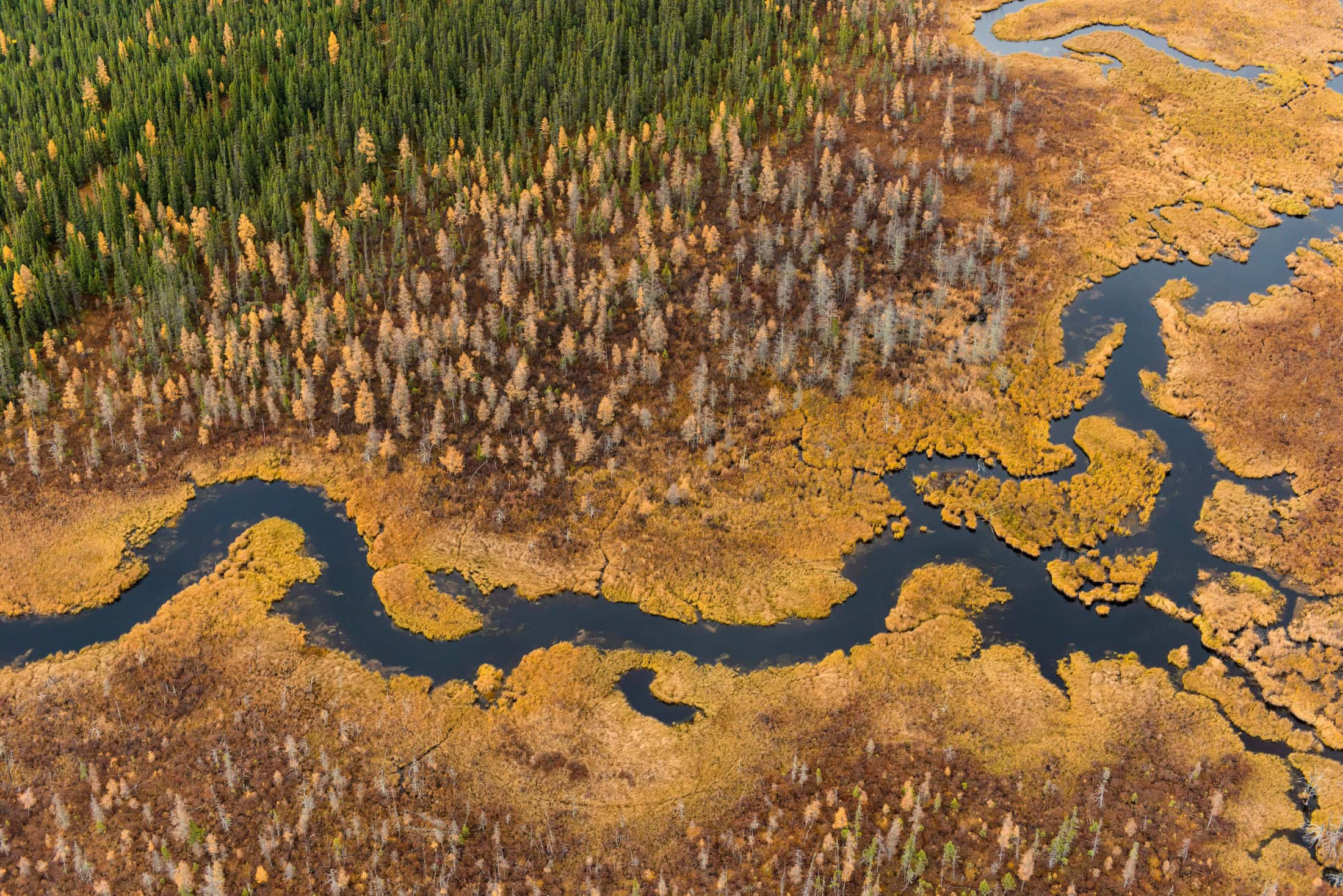 Peatland Ring of Fire Ontario