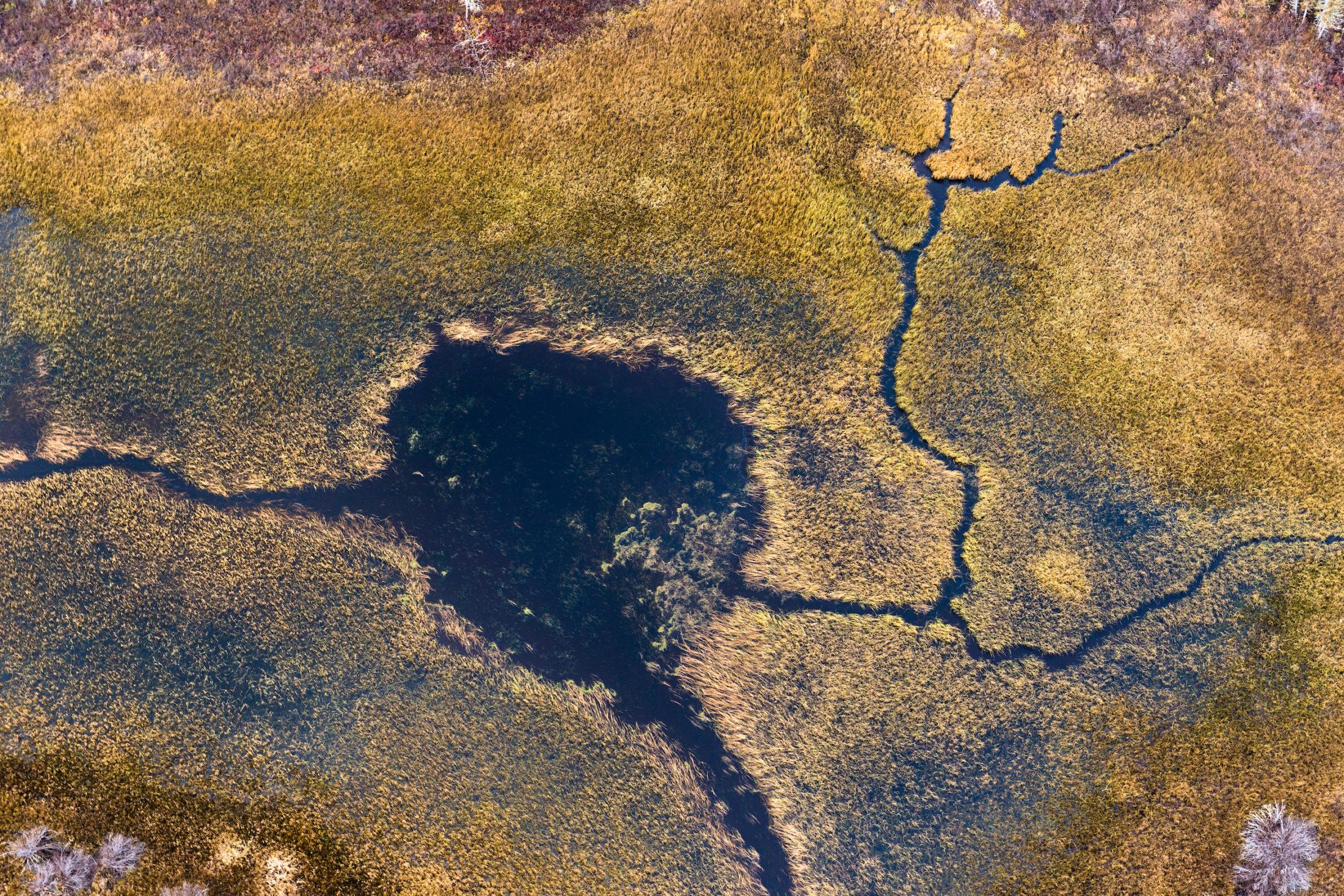 Peatland Boreal Forest Canada Ontario