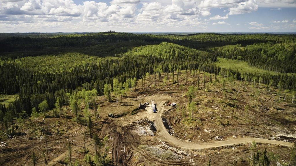 Clearcut boreal forest Dryden ontario