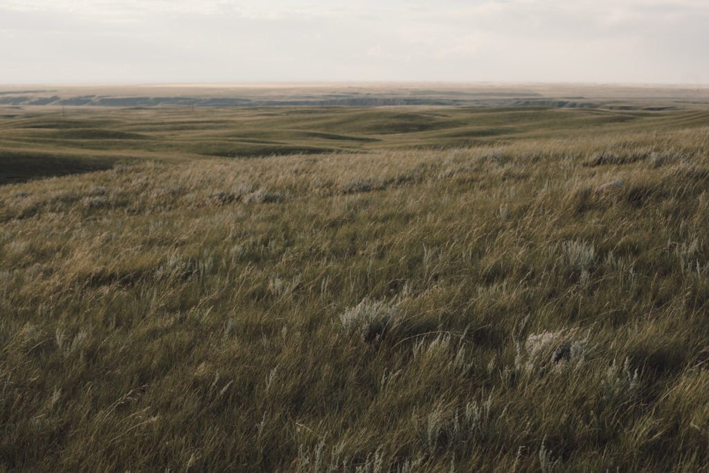 Dry mix grass prairie on the Lomond Grazing Association lease