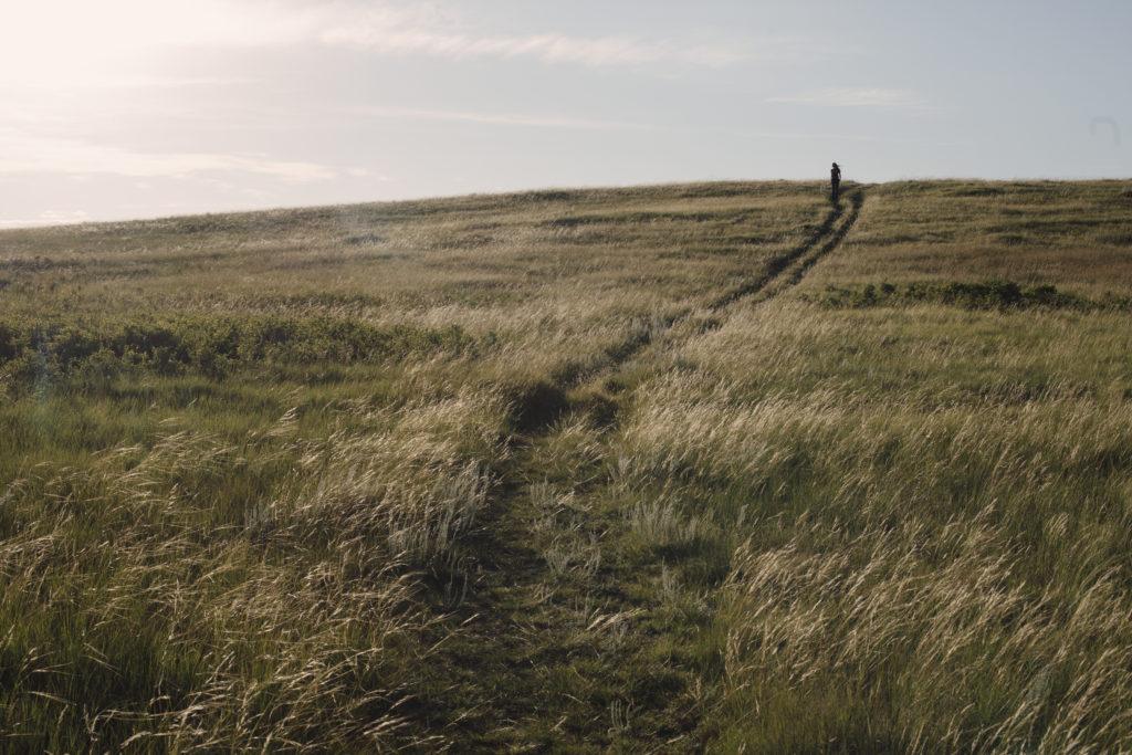 Carbon sequestration grasslands Alberta