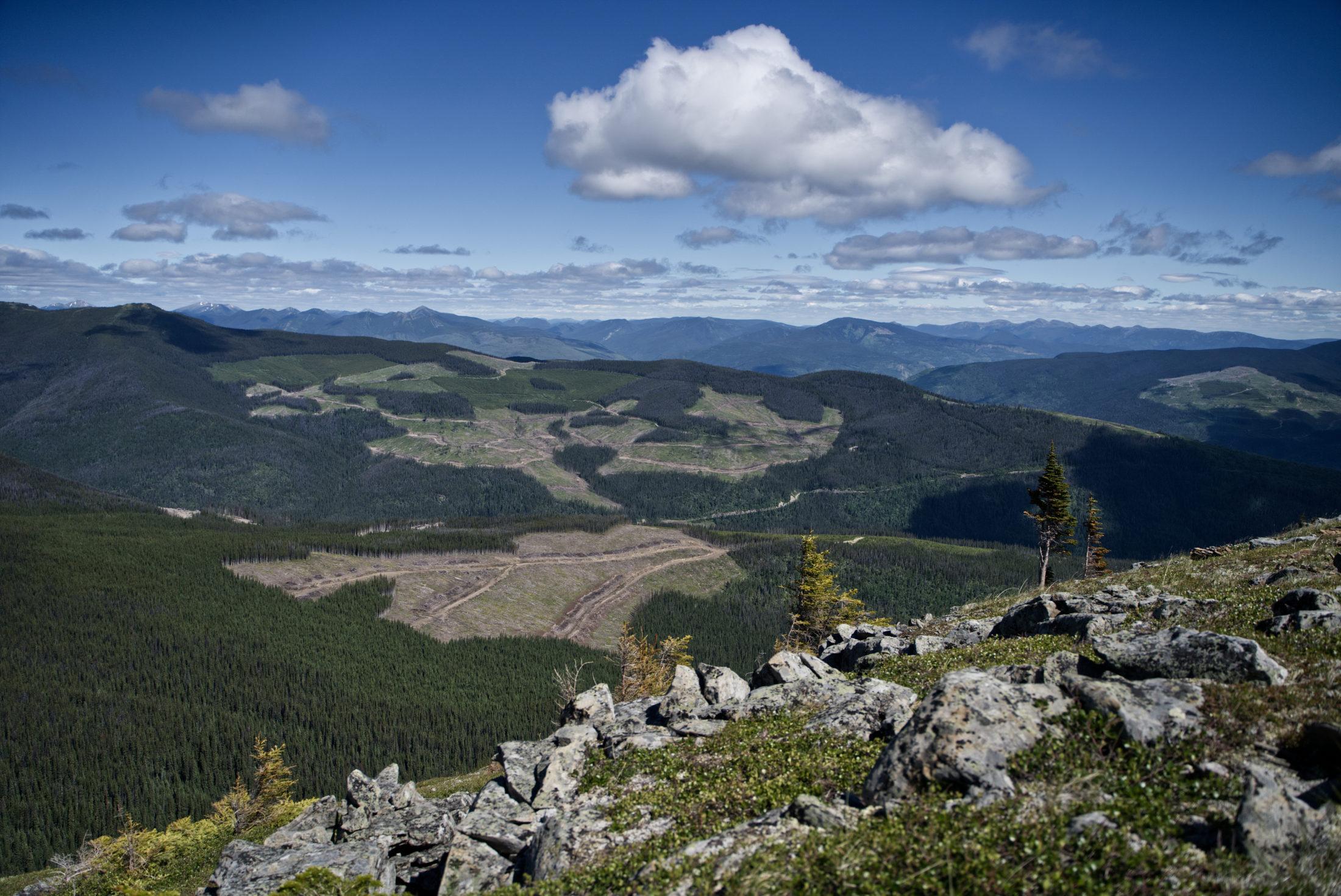 clear-cuts Peace caribou