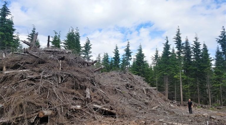 Terrace Community Forest wood waste