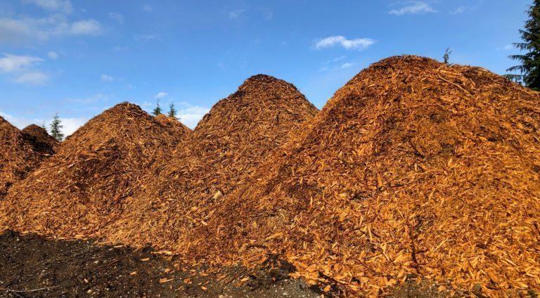 Terrace Community Forest ground slash pile