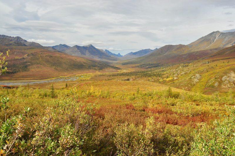 Yukon University native plant mine remediation
