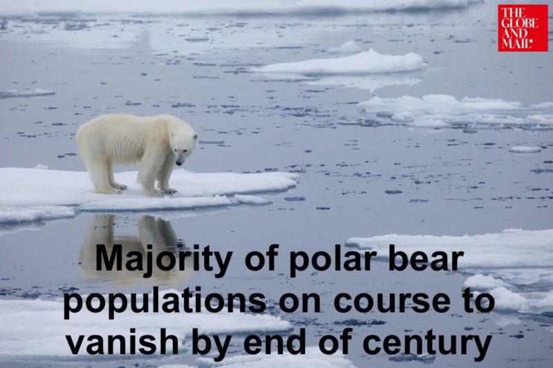 polar bear research globe and mail