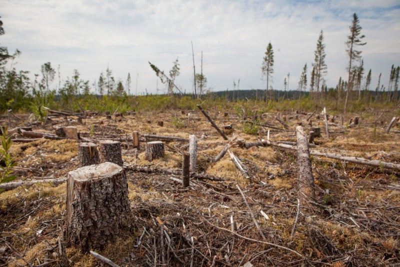 Clearcut Cree territory Quebec