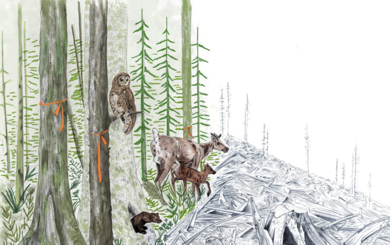 B.C. extinction crisis caribou fisher spotted owl