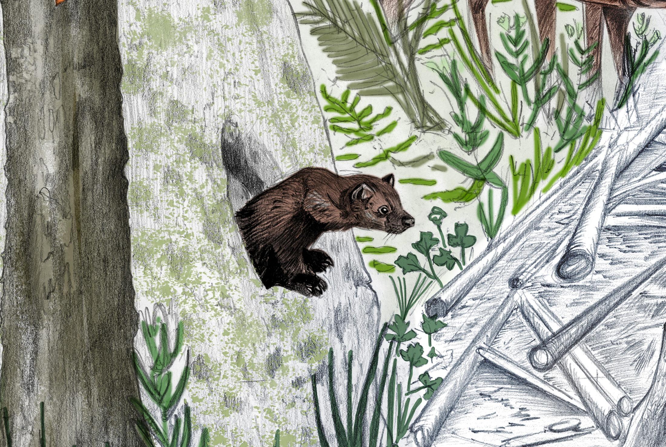 Fisher illustration