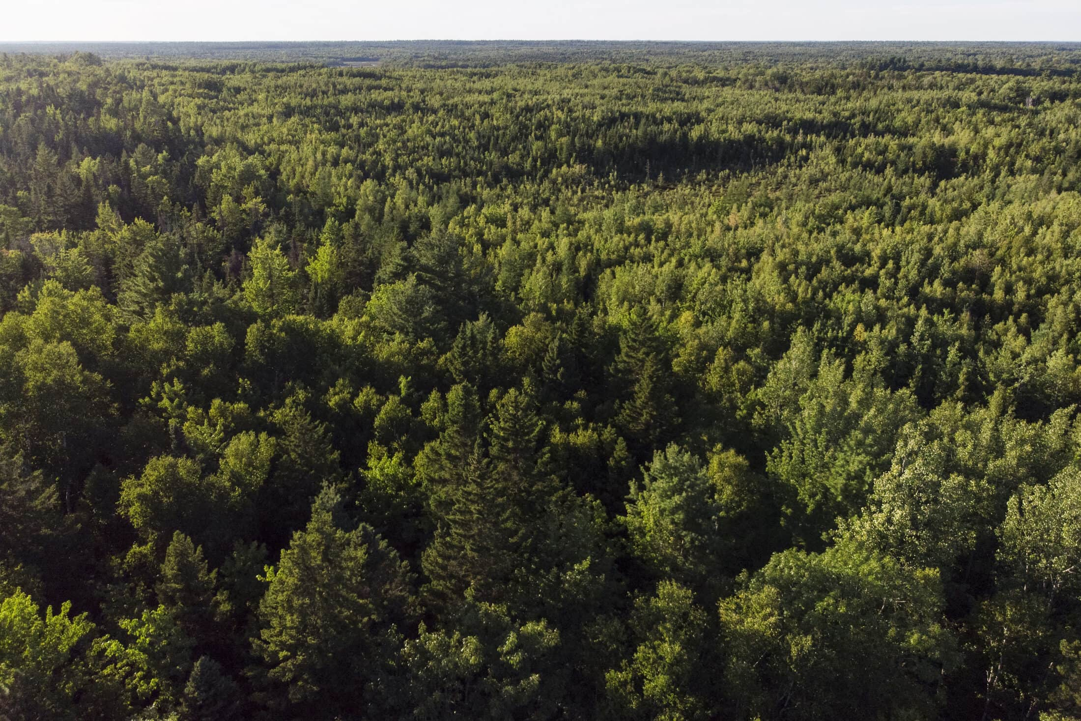 Acadian Forest aerial