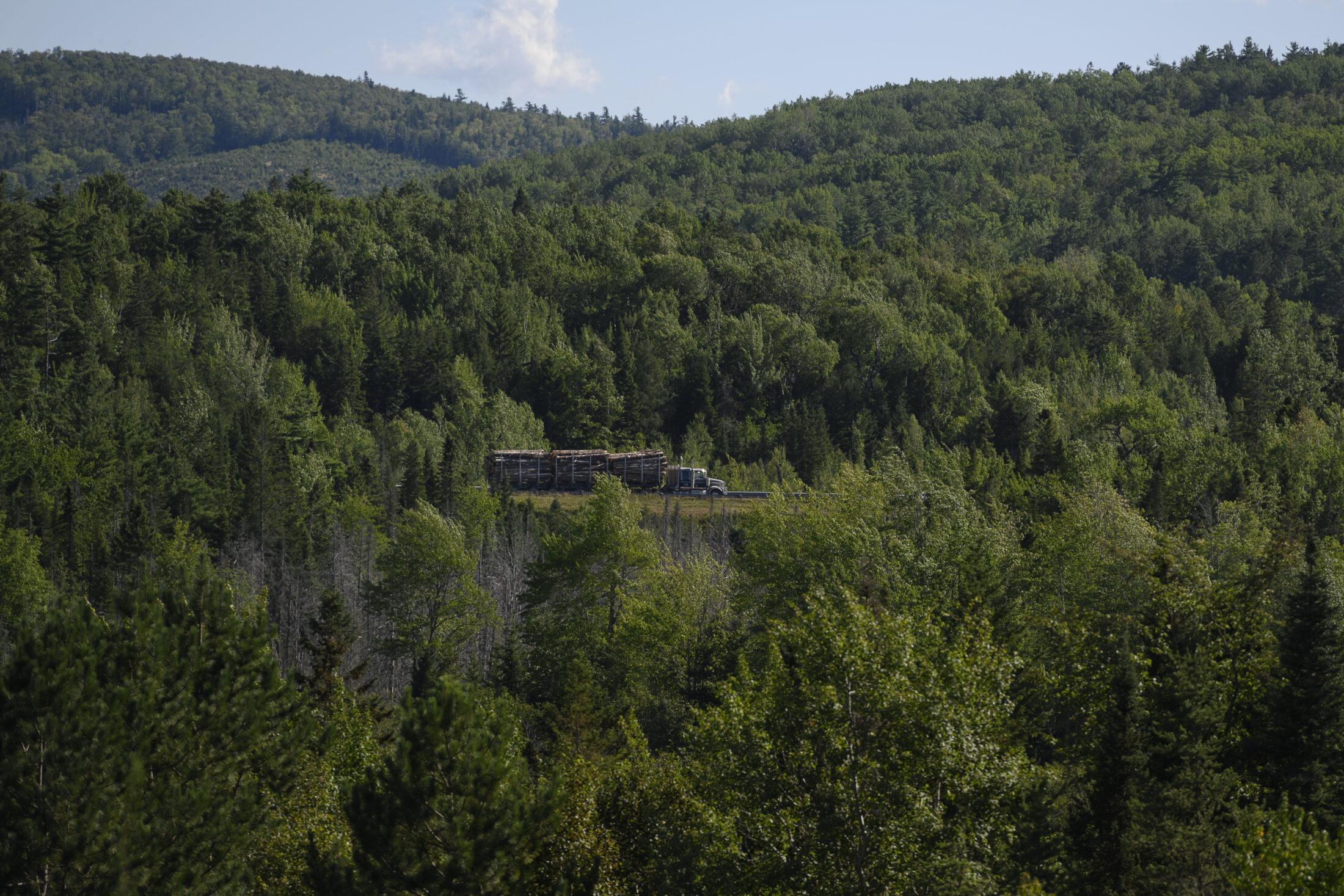 Logging truck Acadian forest