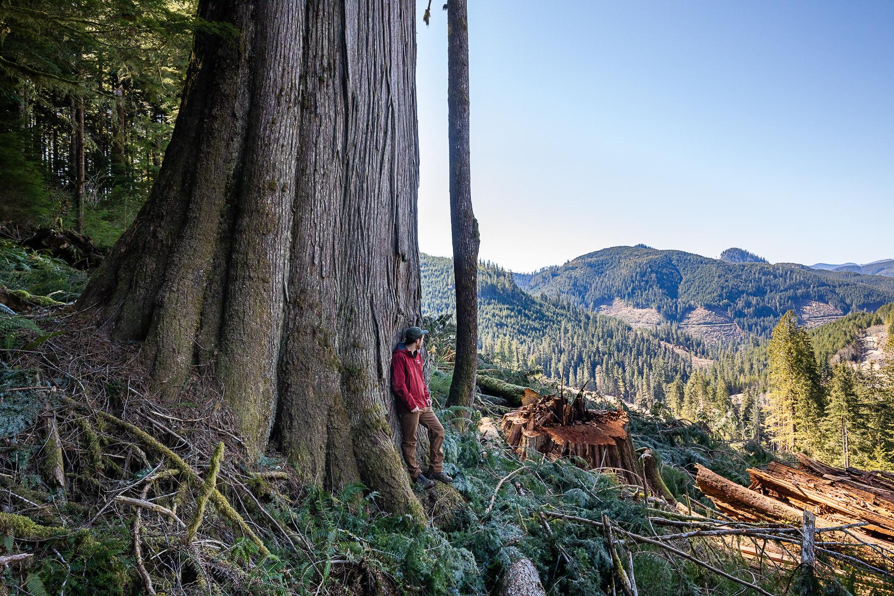 TJ Watt logging