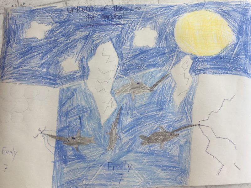 Emily Audette-Longo narwhal drawing