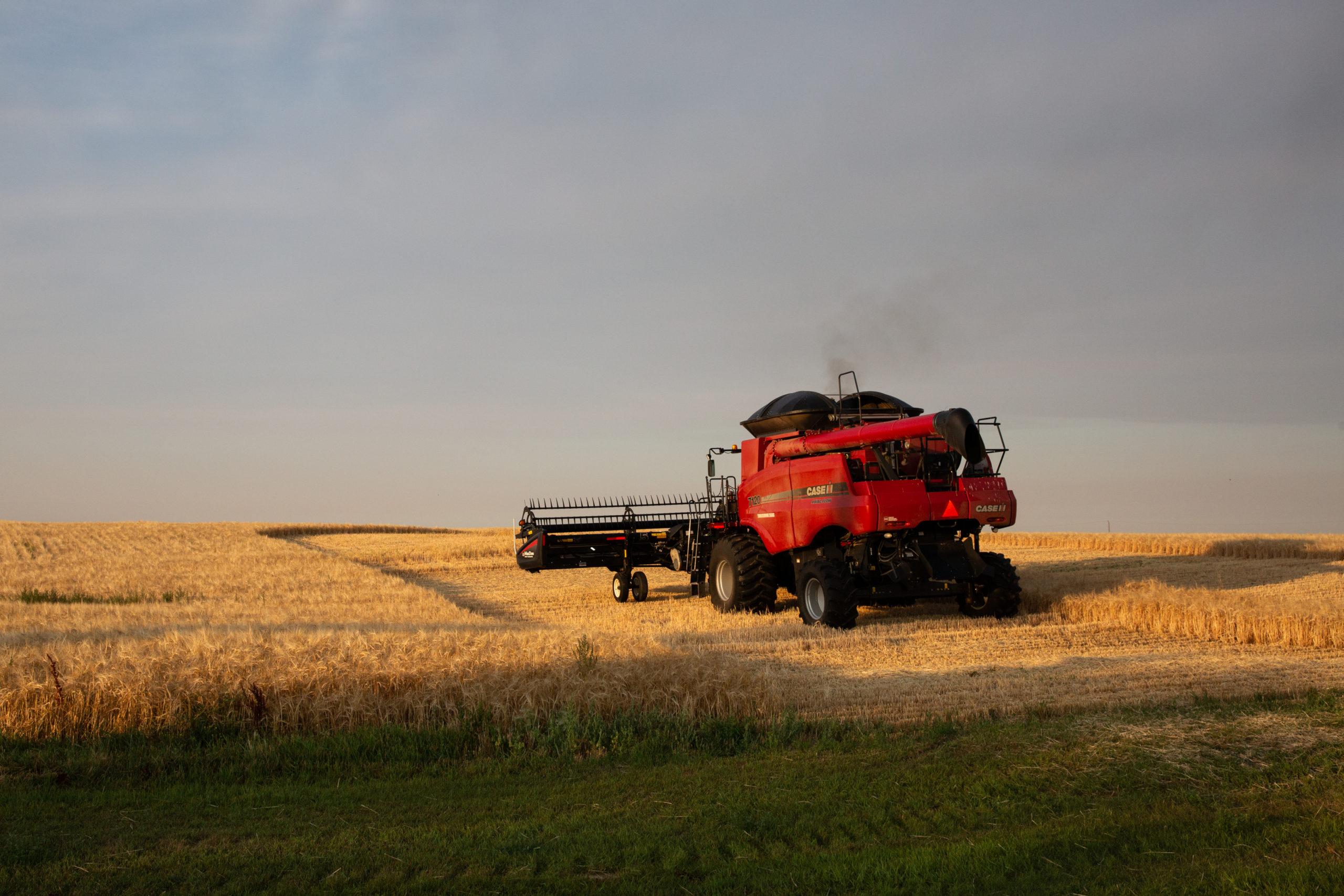 Barley crop Saskatchewan