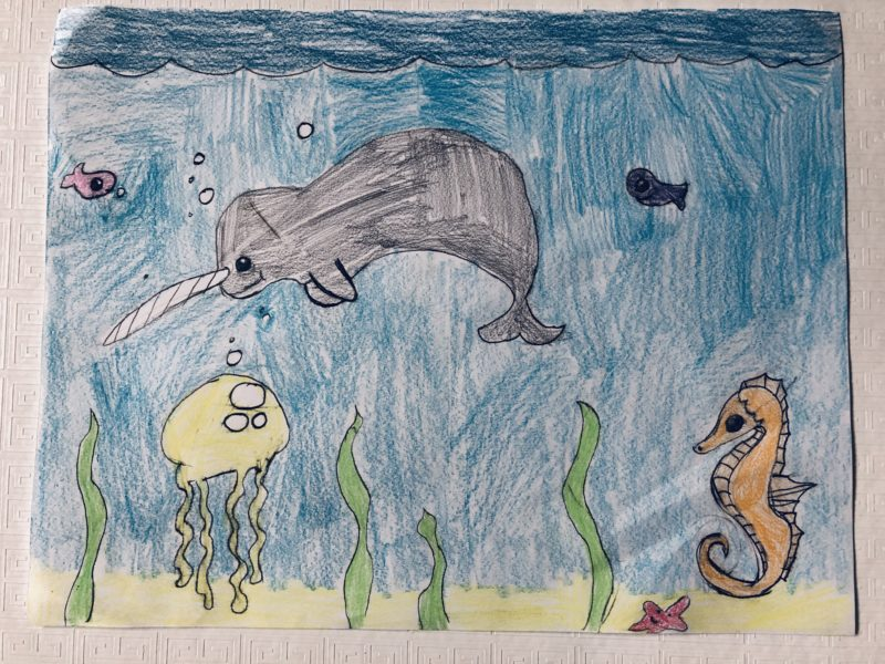 Sofia Dietrich Woods narwhal drawing