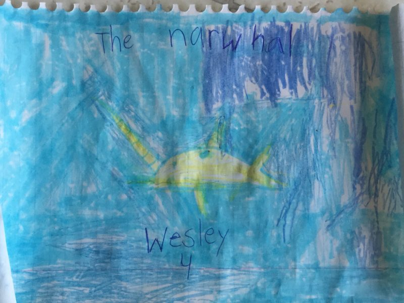 Wesley Audette Longo narwhal drawing