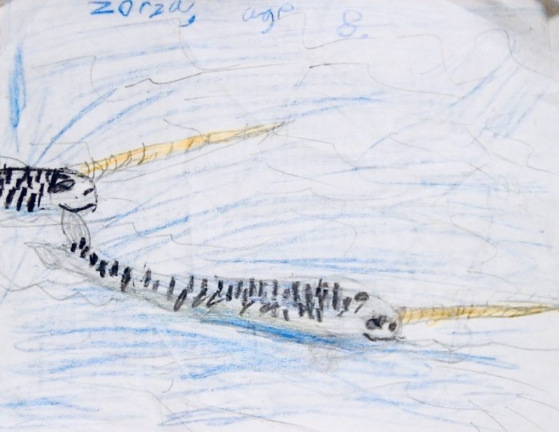 Zorza plachta narwhal drawing