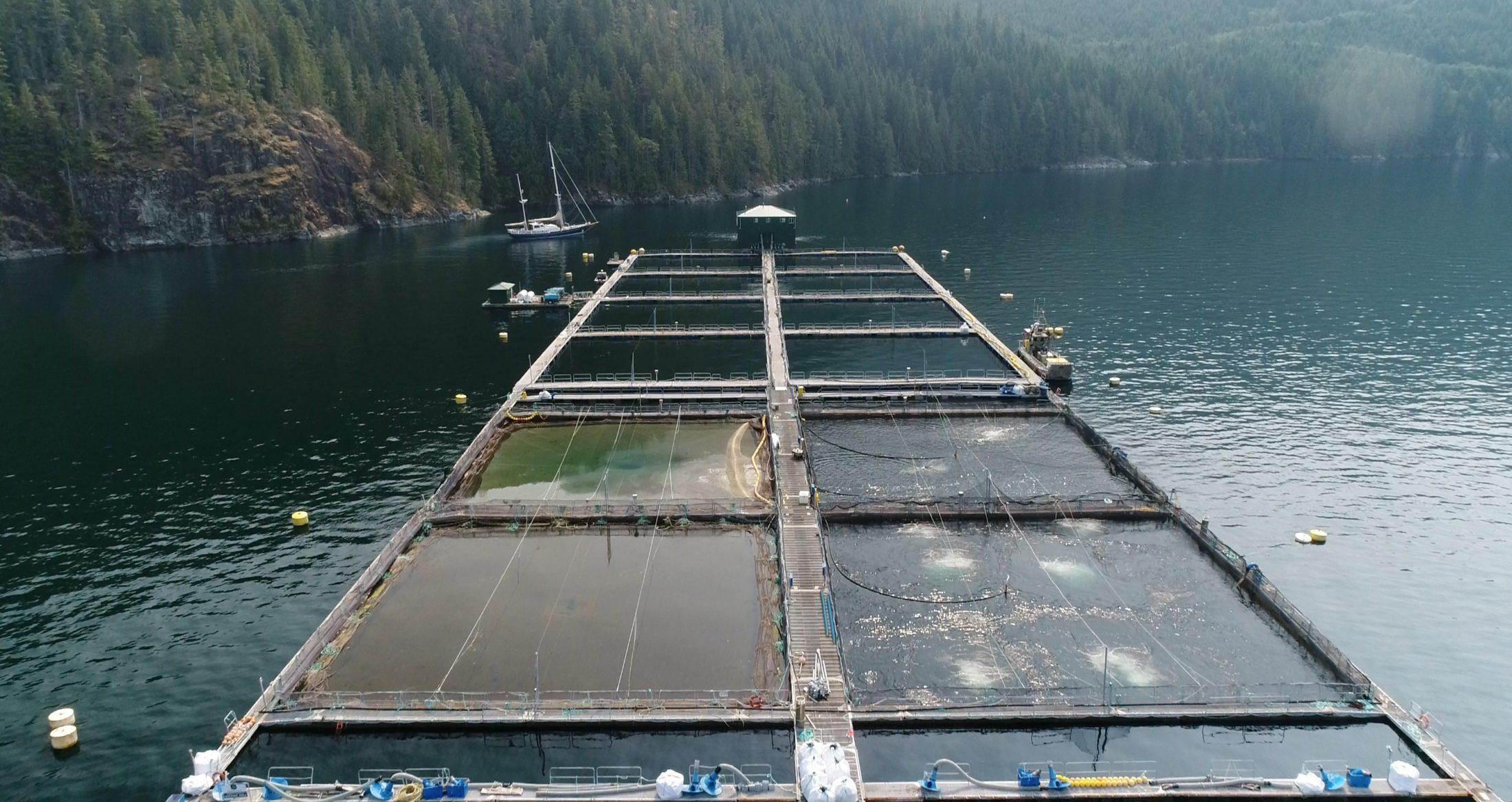 Salmon farm B.C.