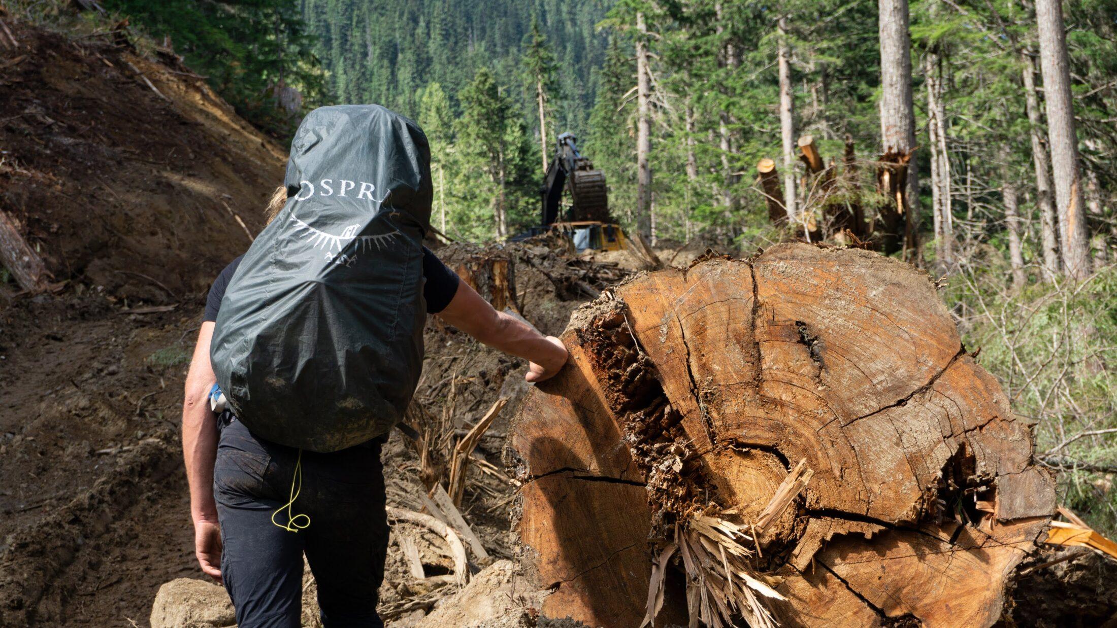 Argonaut Creek drainage logging