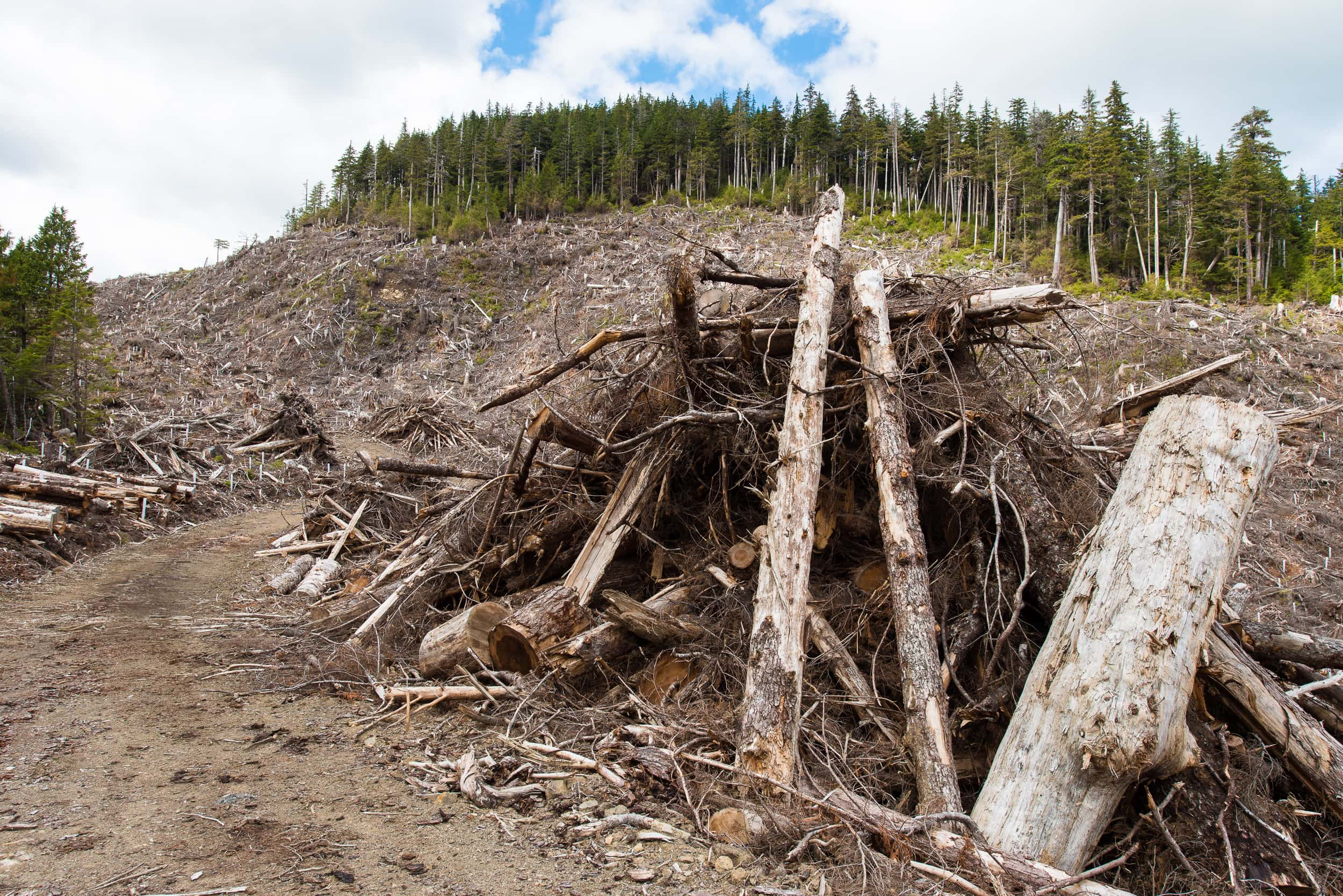 piles of timber on Graham Island