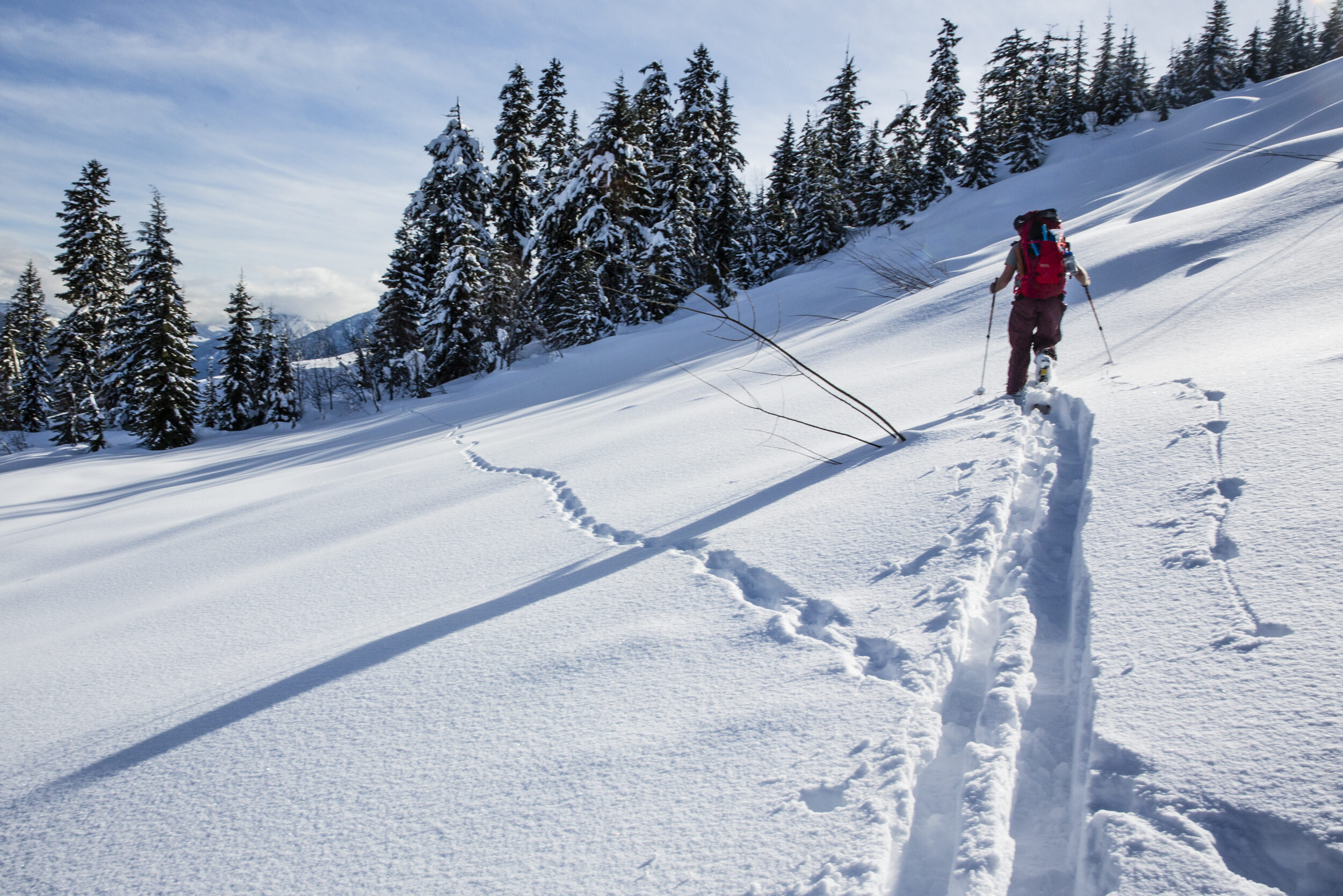 Backcountry skier wolverine track David Moskowitz