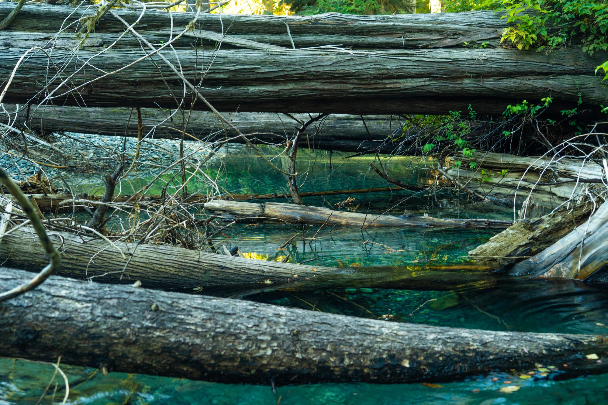 Large woody debris in the Muchalat Lake watershed