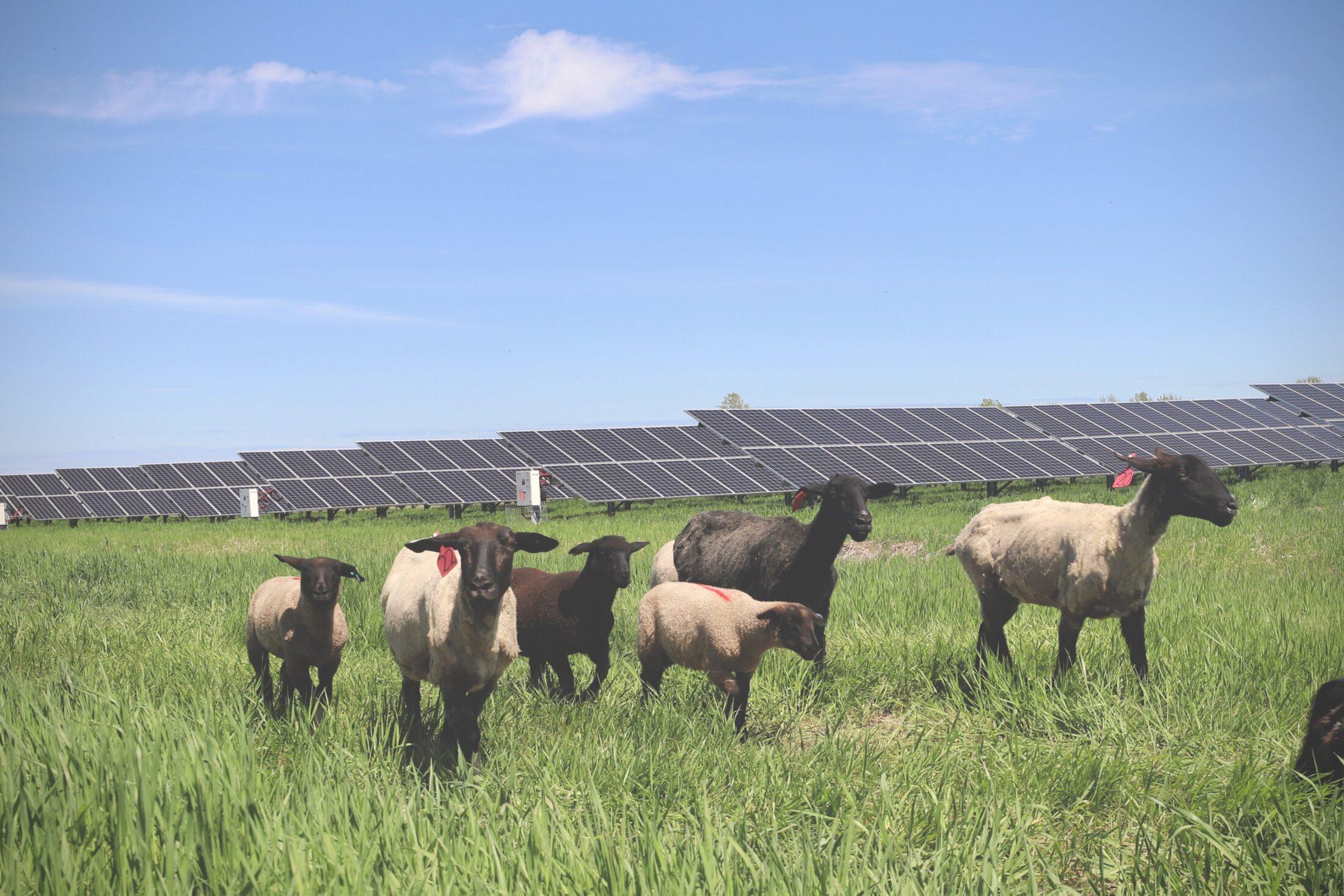 Solar project Alberta
