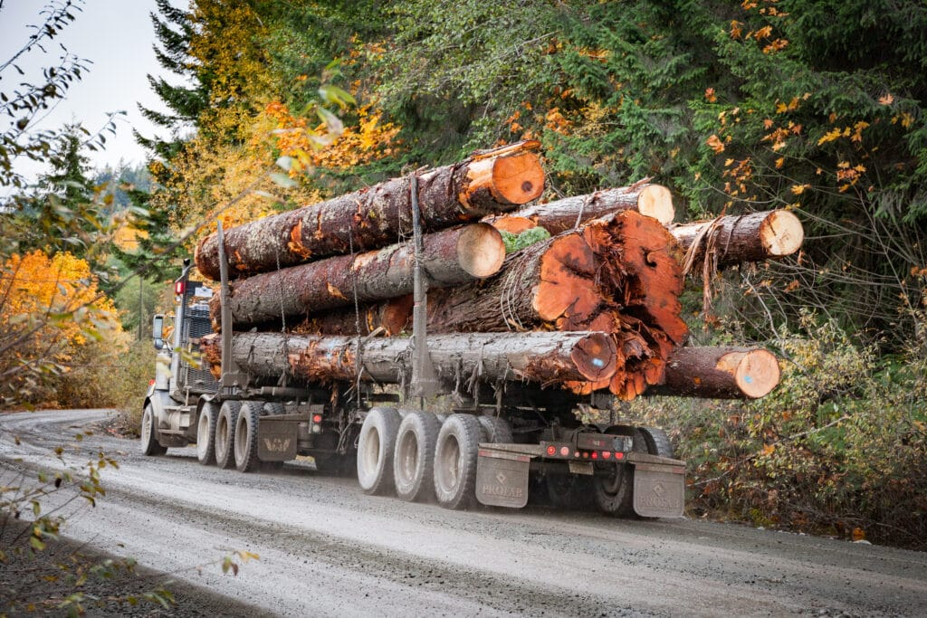 'Put away your power saws': First Nations leaders, conservationists have a new plan to protect old-growth